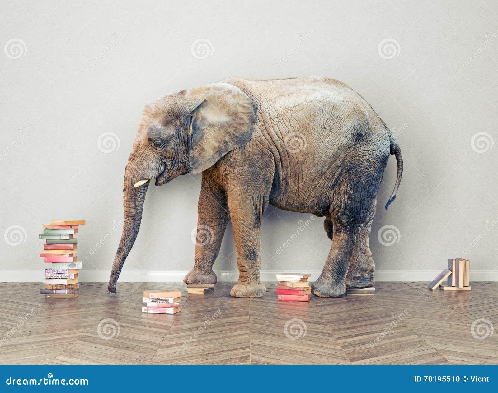 Elefant i rummet
