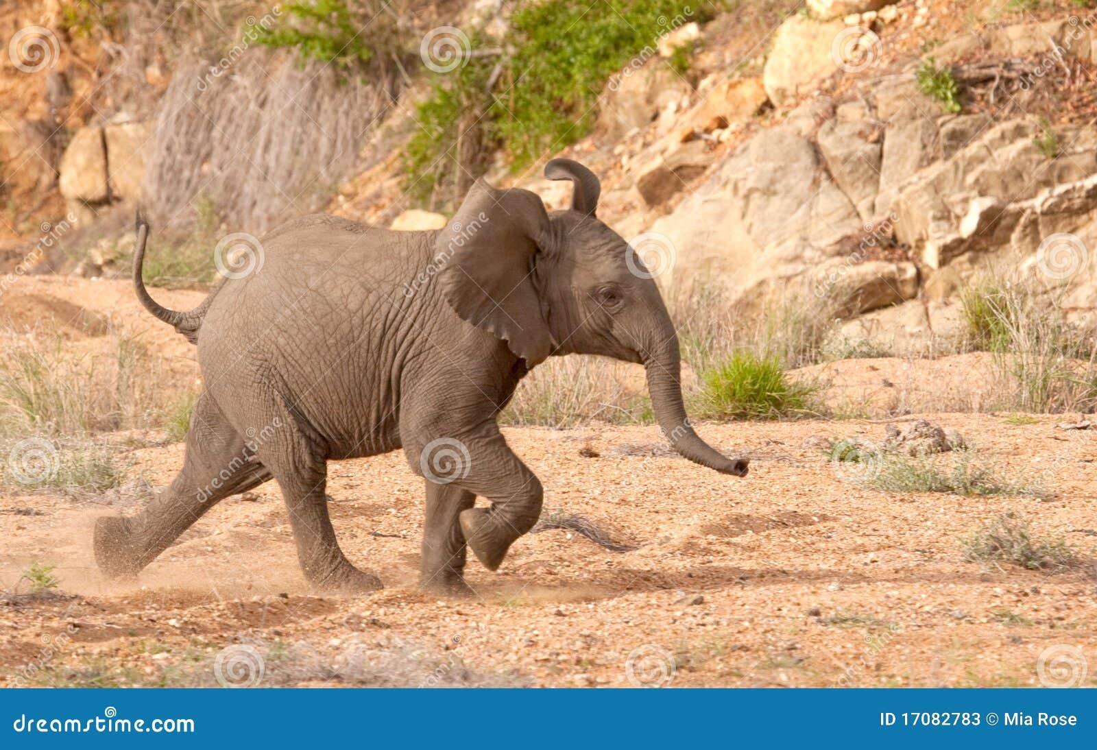 Elefant-Kalb-Betrieb