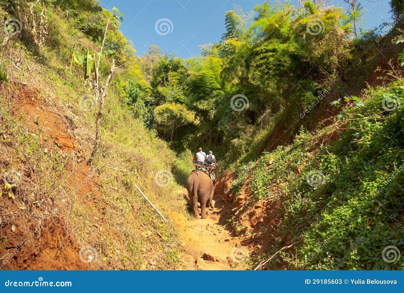 Elefant-Trekking