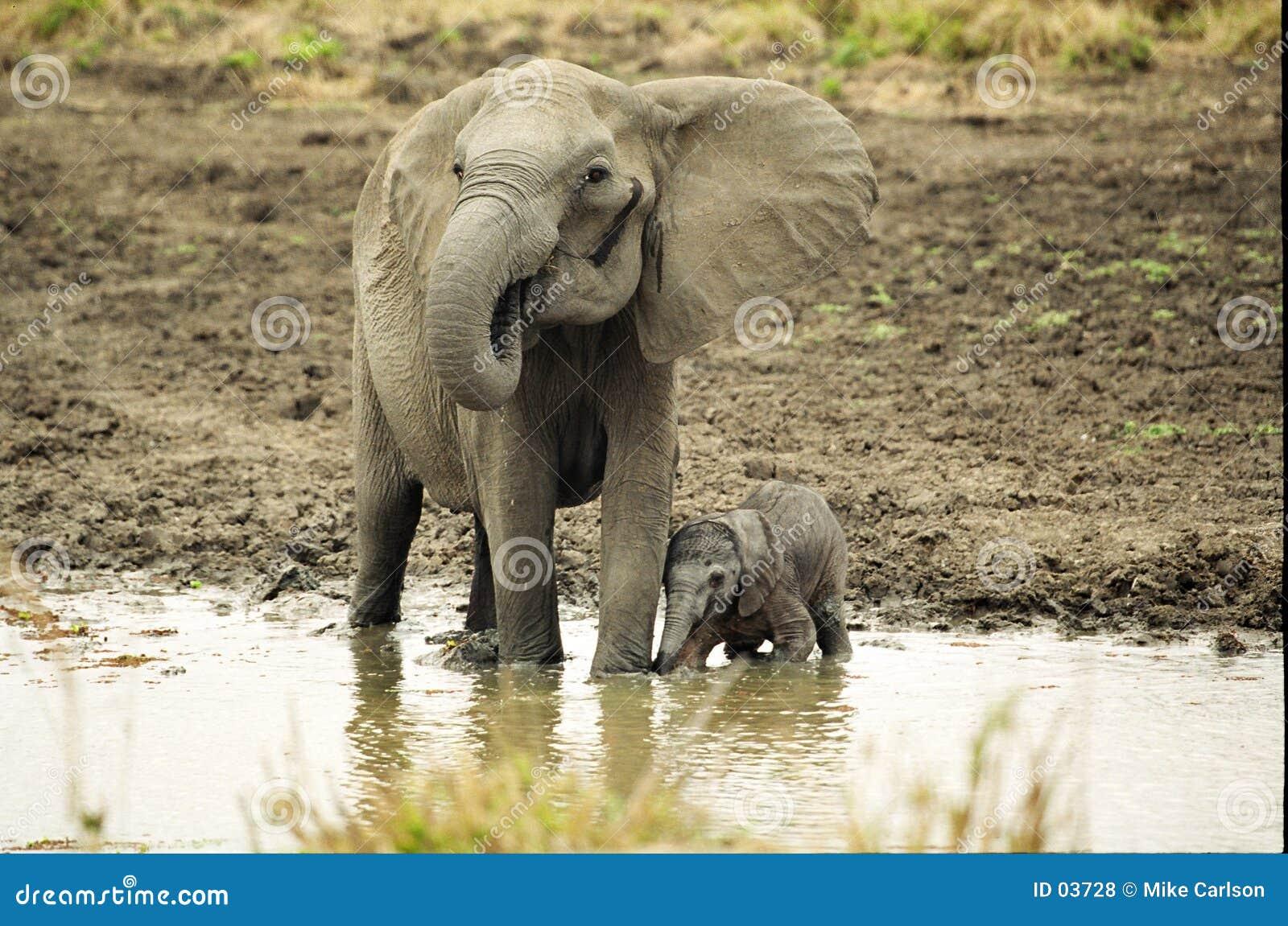 Elefant und neugeborenes
