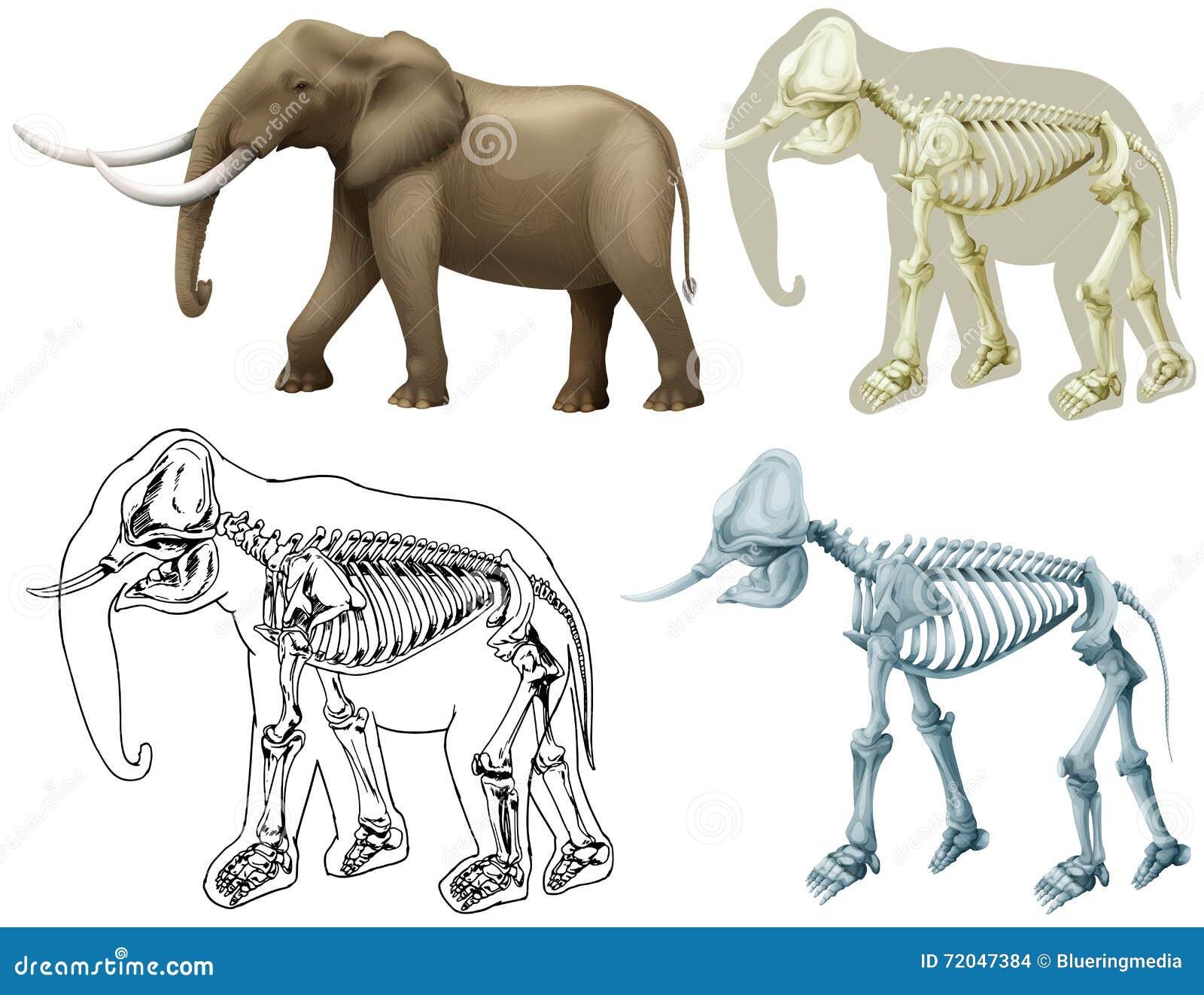 Elefant und sein Körper vektor abbildung. Illustration von leben ...