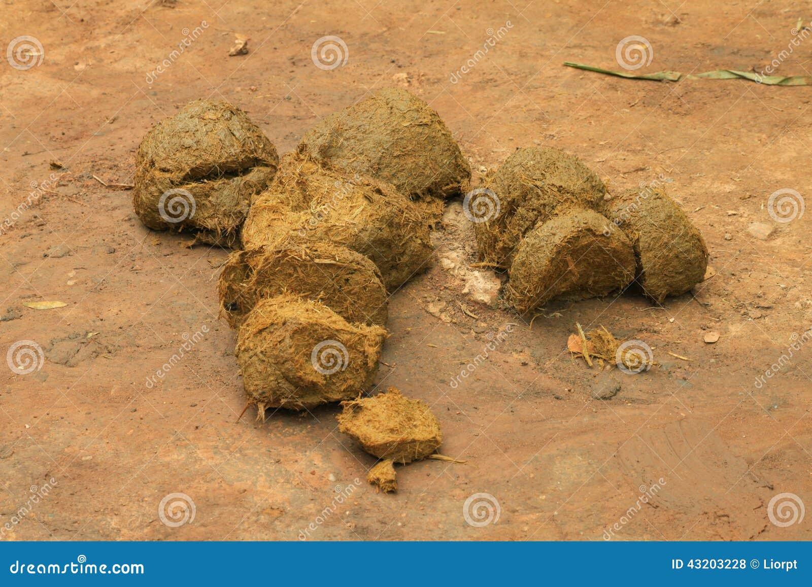 Download Elefantdynga arkivfoto. Bild av sänkning, natur, nytt - 43203228