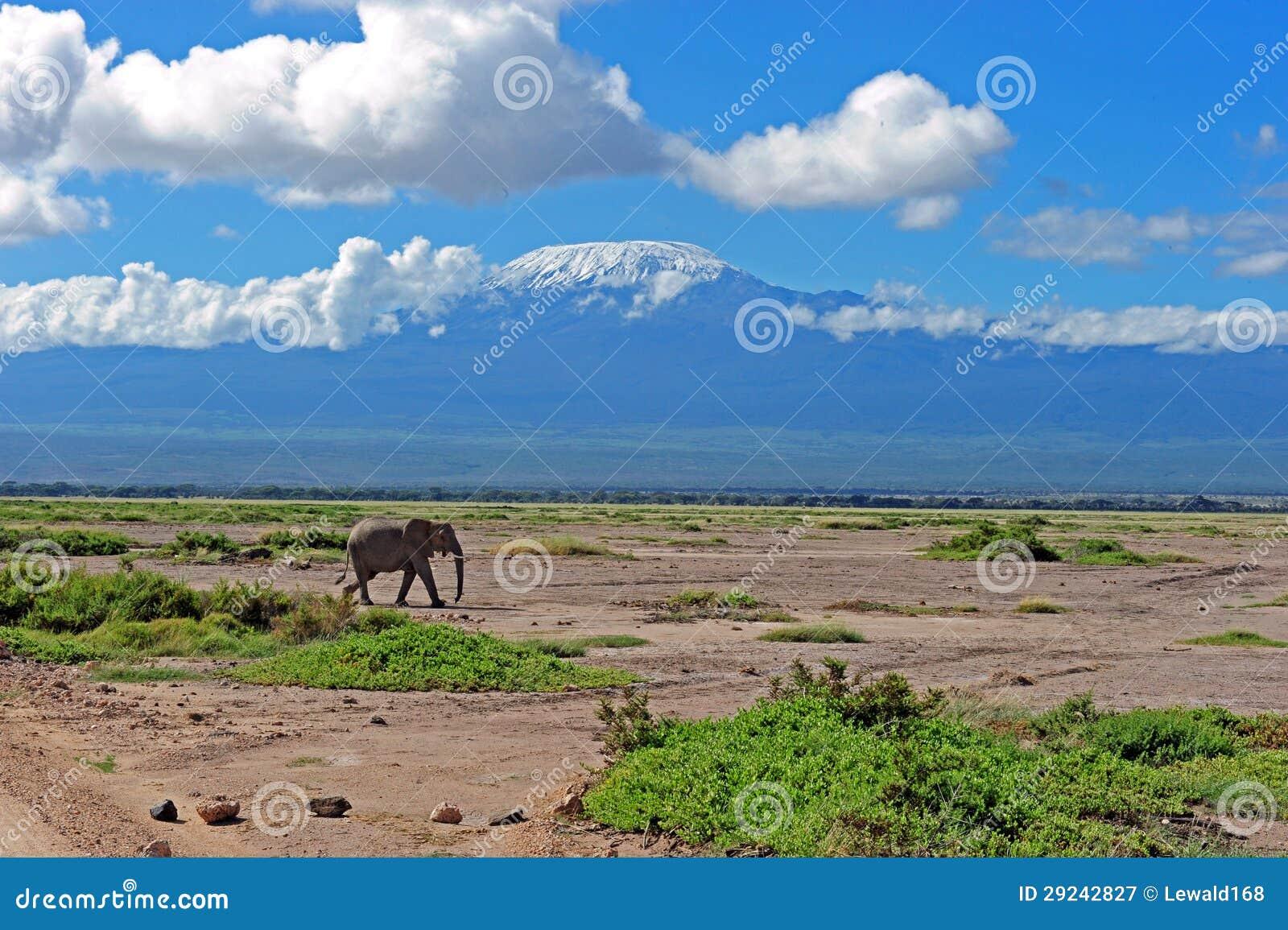 Download Elefante imagem de stock. Imagem de presa, elefante, kenya - 29242827