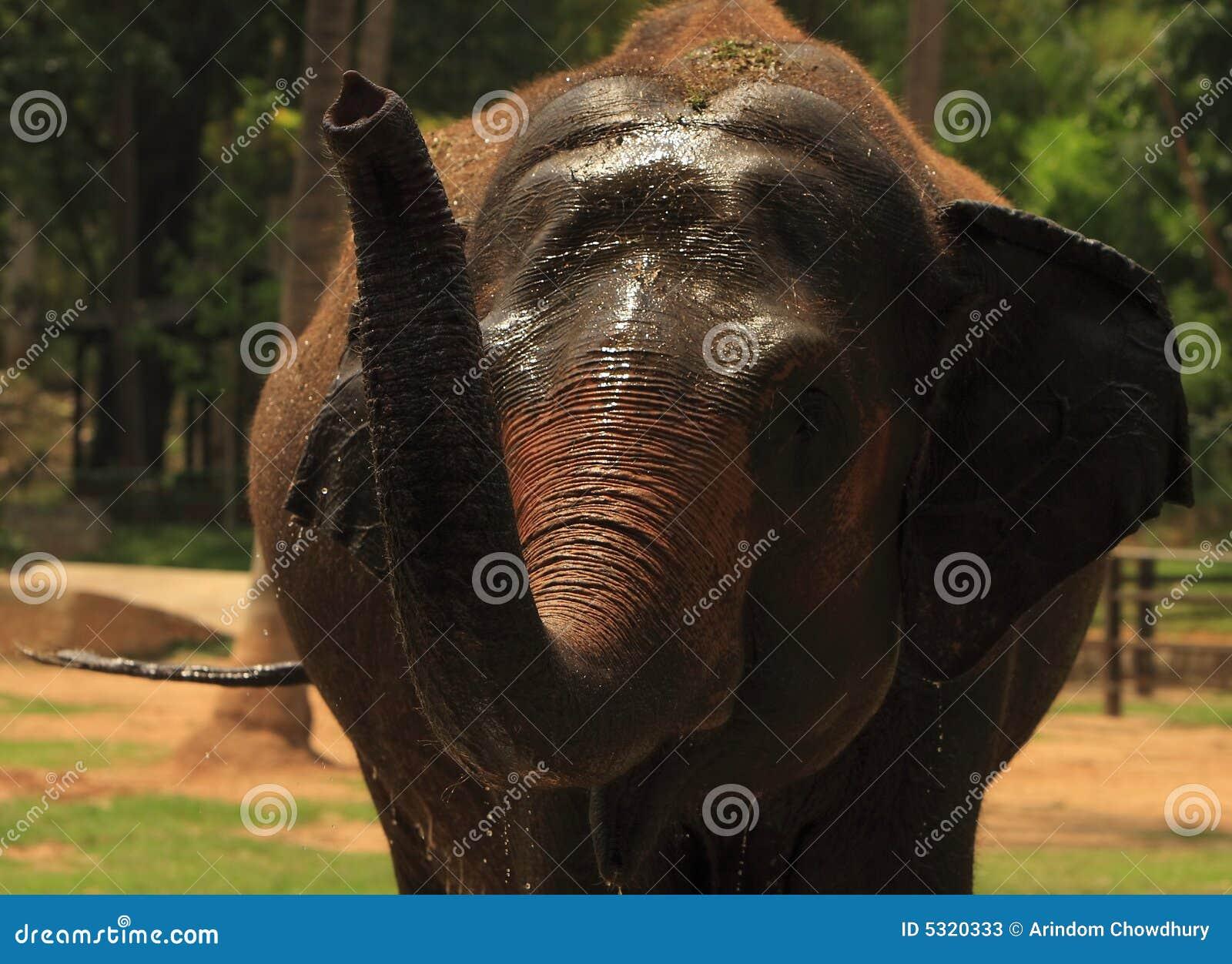 Download Elefante immagine stock. Immagine di elefante, nave, zanne - 5320333