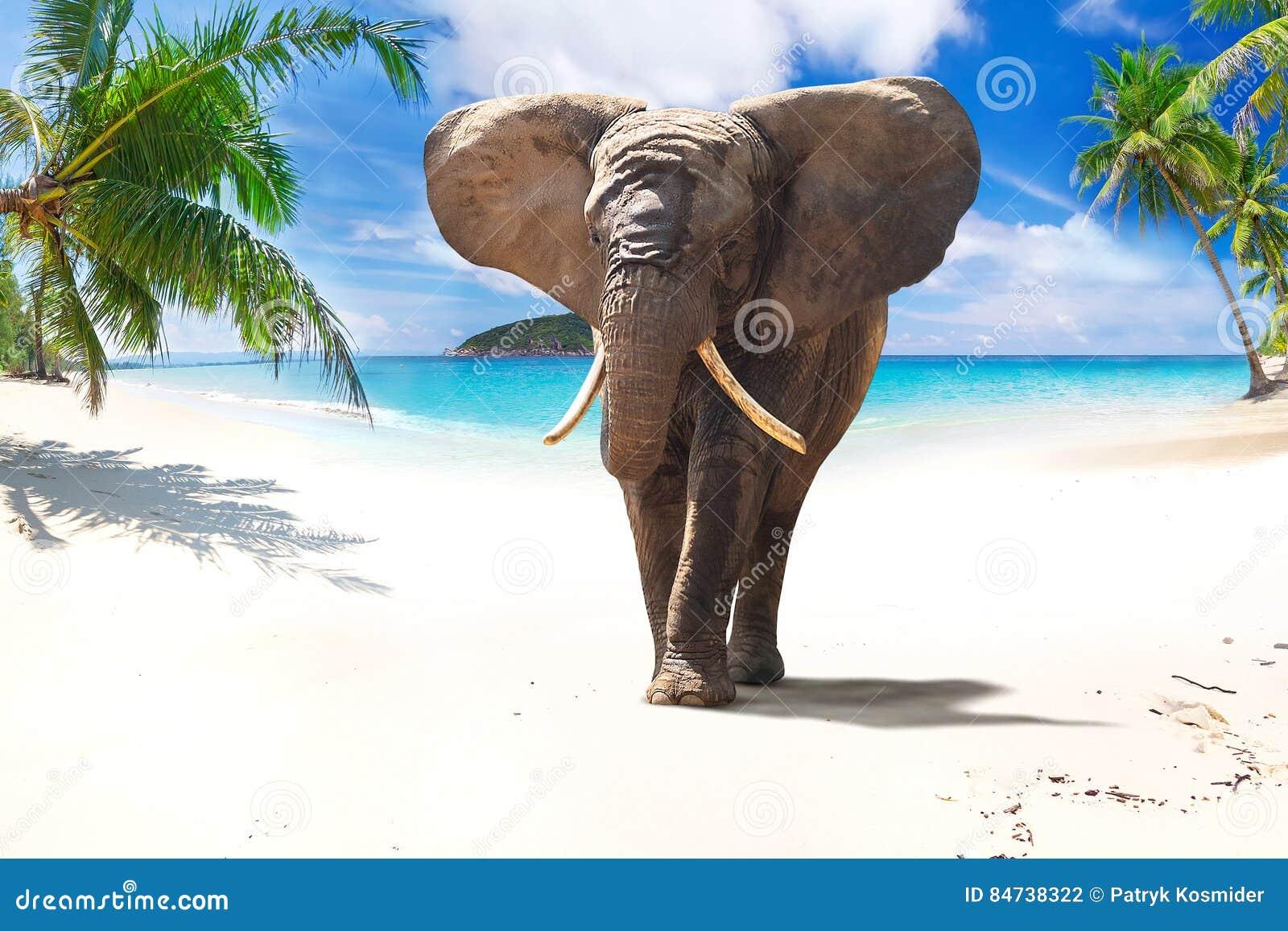 Elefante africano che cammina sulla spiaggia