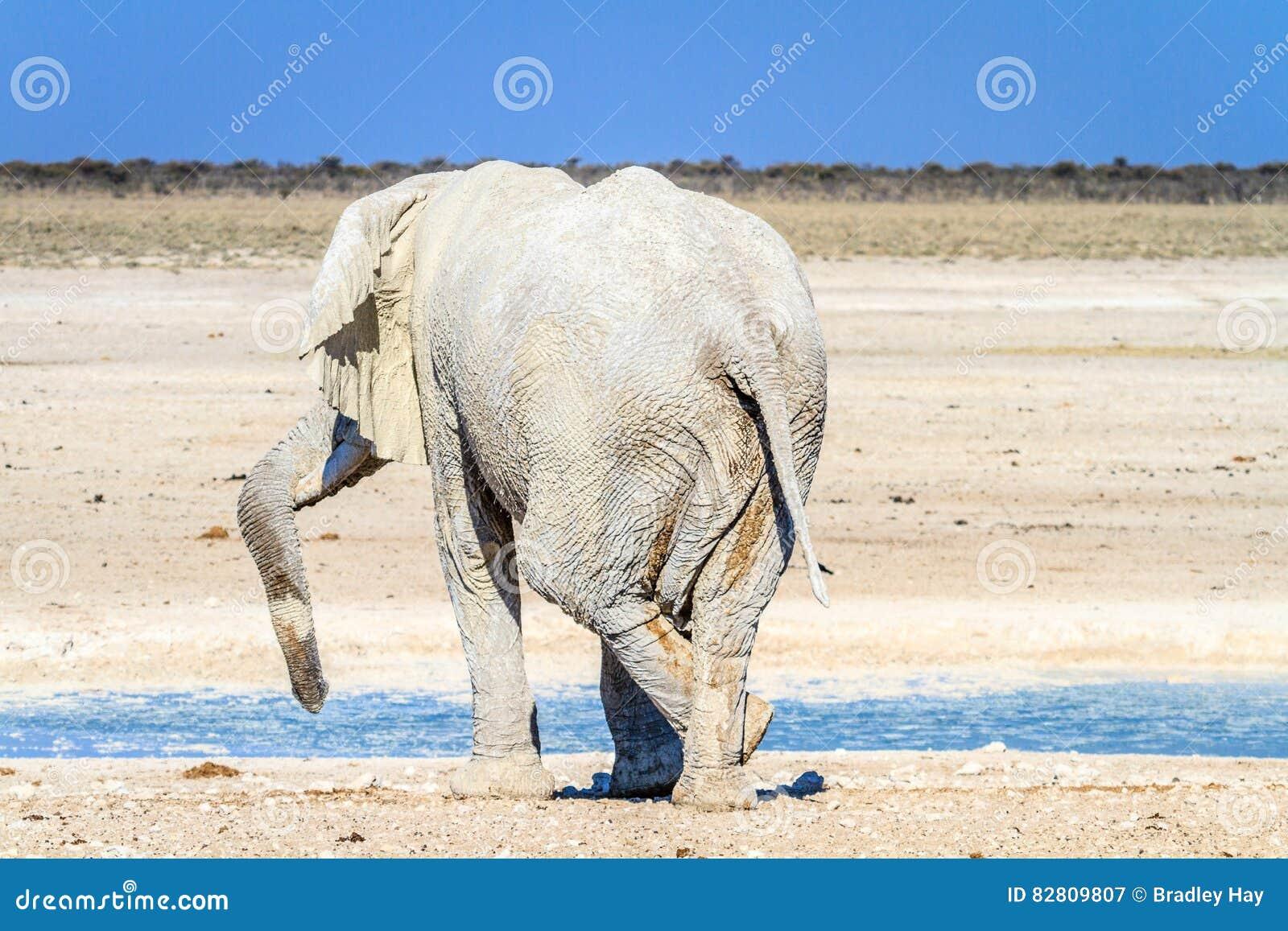Elefante africano que se relaja en el waterhole en el parque nacional de Etosha, Namibia, África
