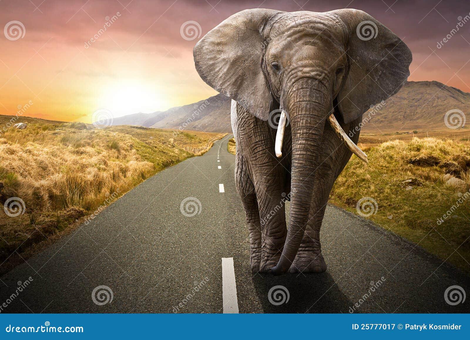 Elefante che cammina sulla strada