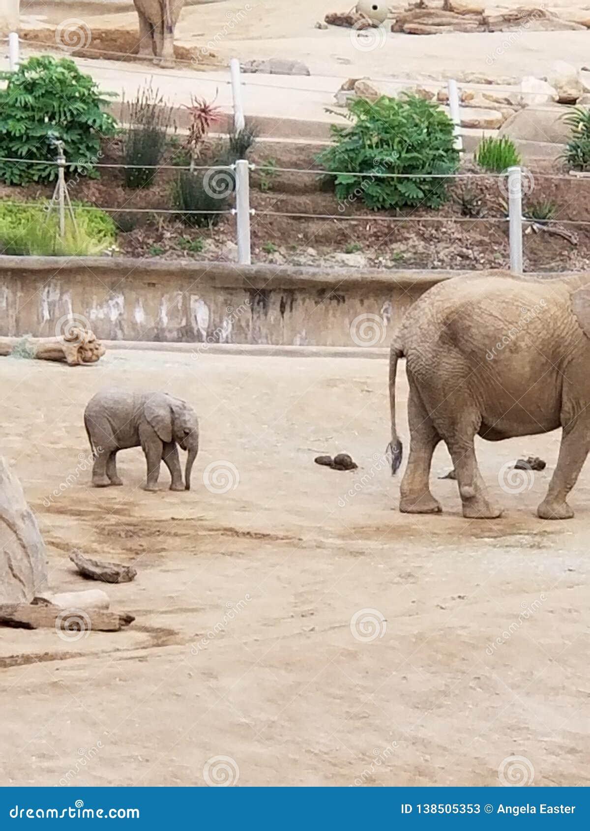 Elefante da mamãe com bebê