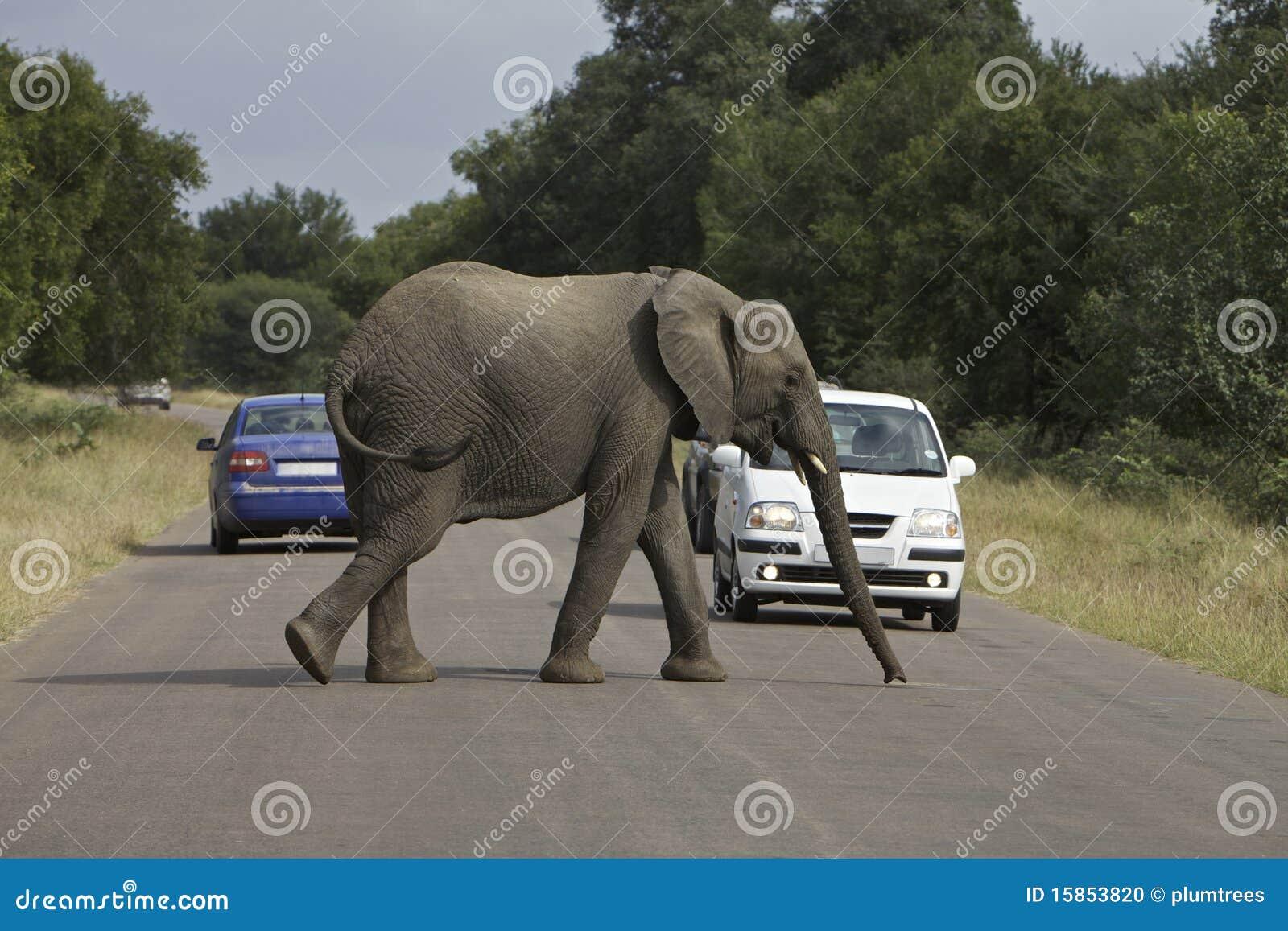 Elefante de Afircan