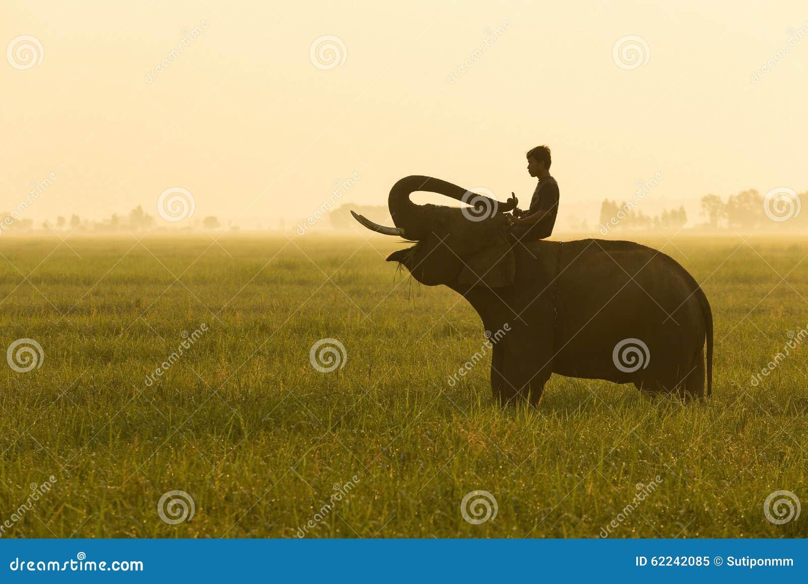 Elefante e mahout