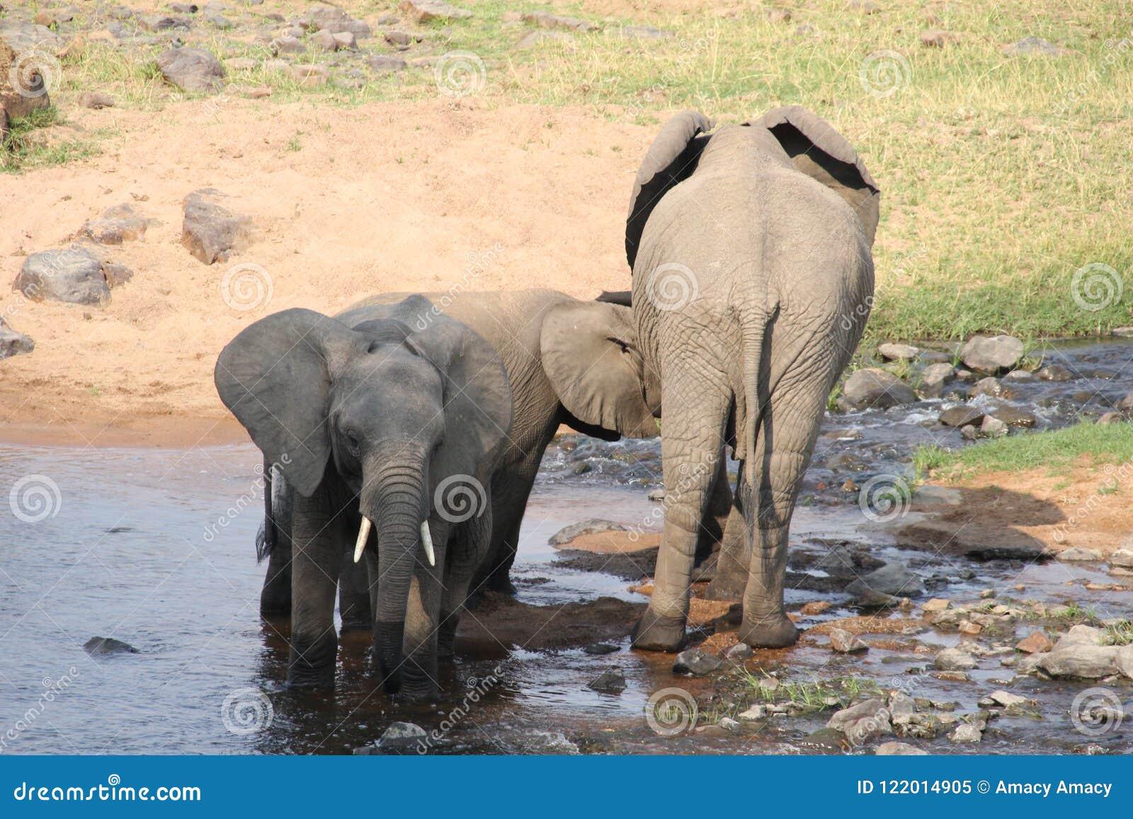 Elefante en el arbusto en el parque nacional del ruaha