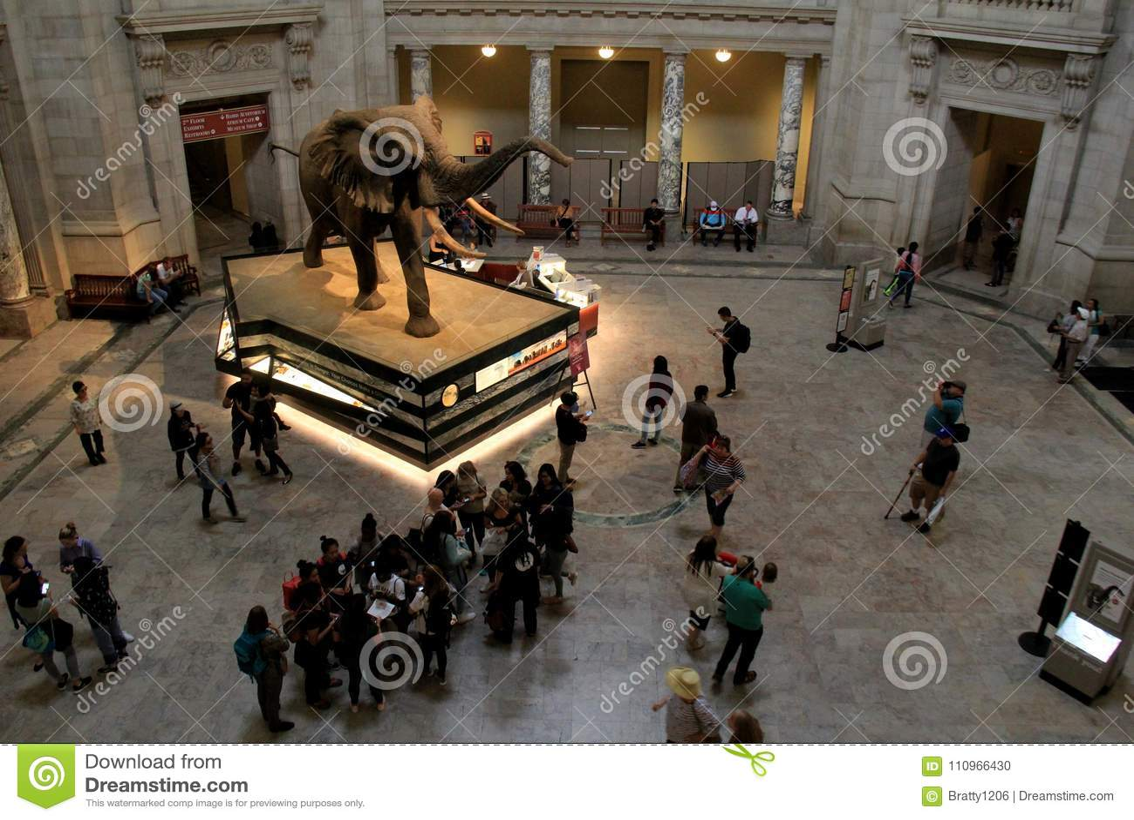 Elefante en el drenaje de la Rotonda mucha atención, Museo Nacional de Smithsonian de la historia natural, DC, 2017