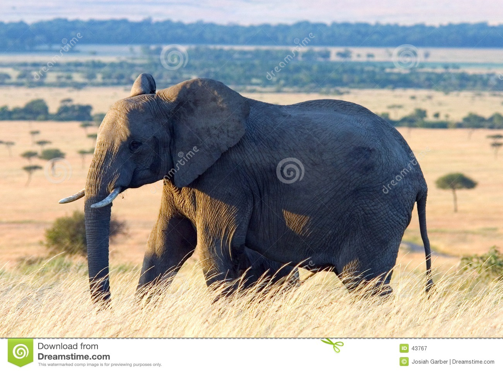 Download Elefante En Los Llanos Africanos Imagen de archivo - Imagen de elefante, mara: 43767