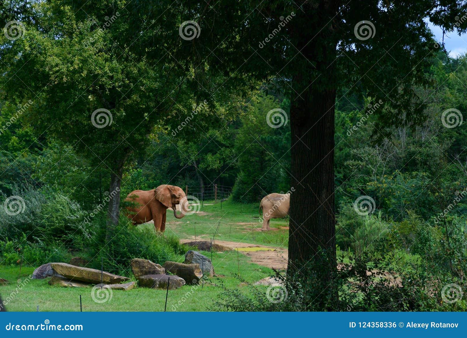 Elefante grande no fundo da floresta