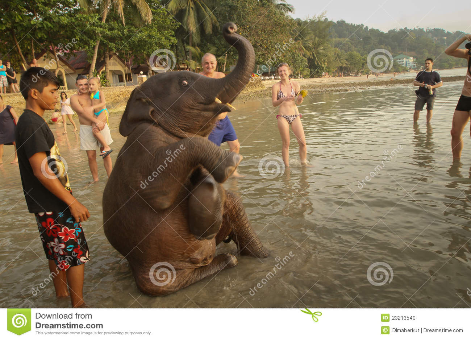 Elefante indiano novo