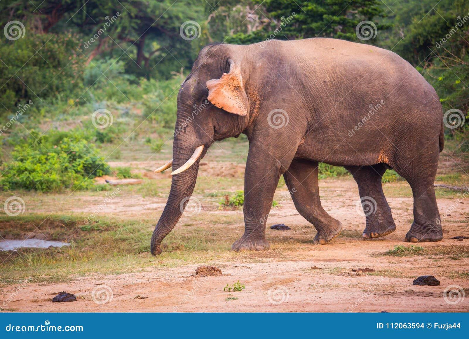 Famoso Elefante Tutorial Arte De Uñas Galería - Ideas de Diseño de ...