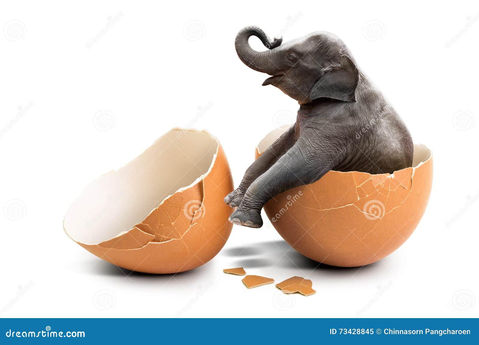 Elefante na casca de ovo
