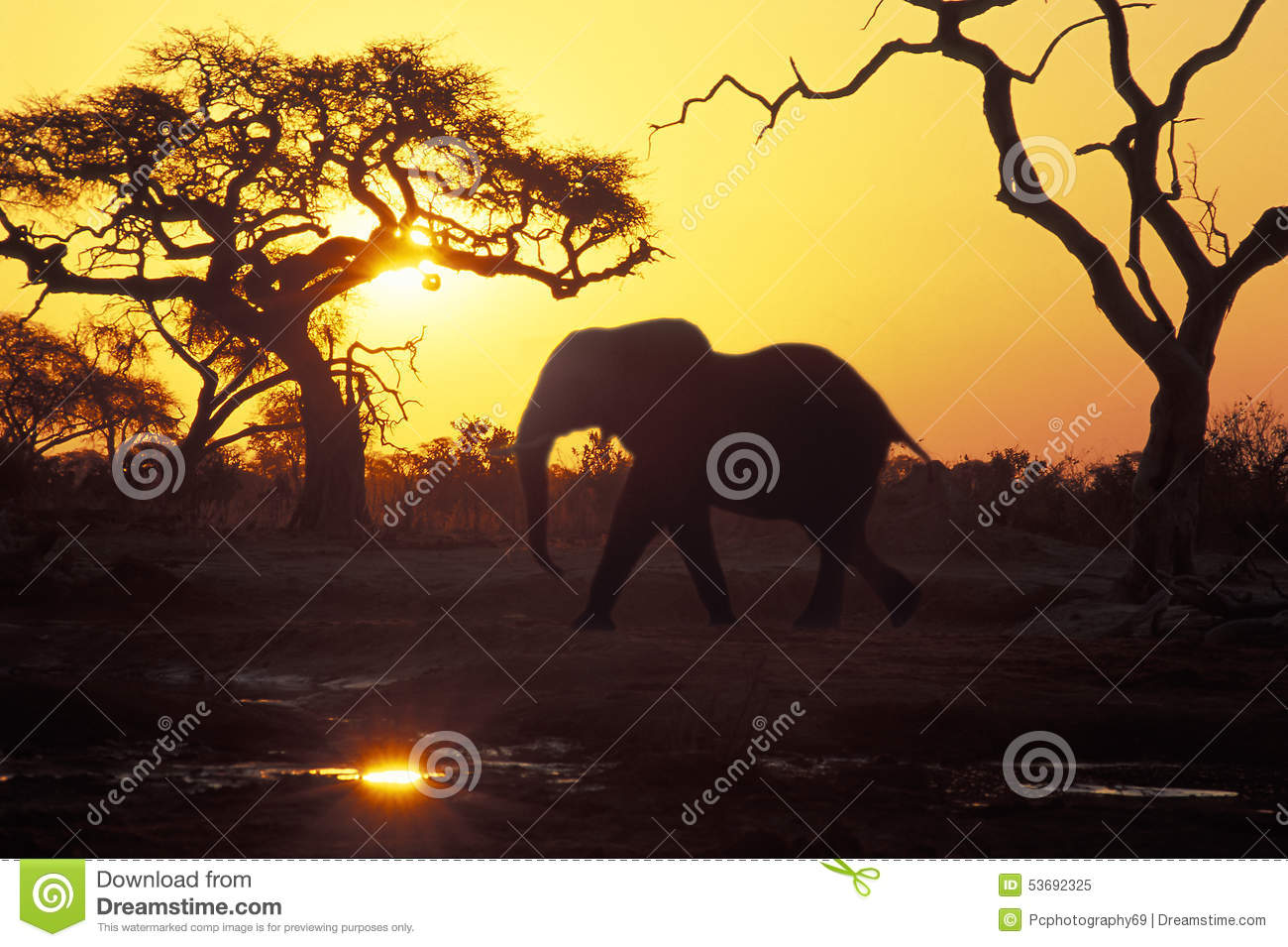 Elefante no por do sol, Botswana