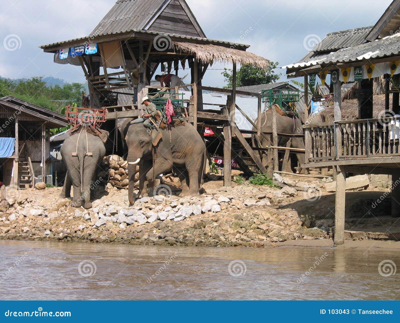 Elefante para o aluguer