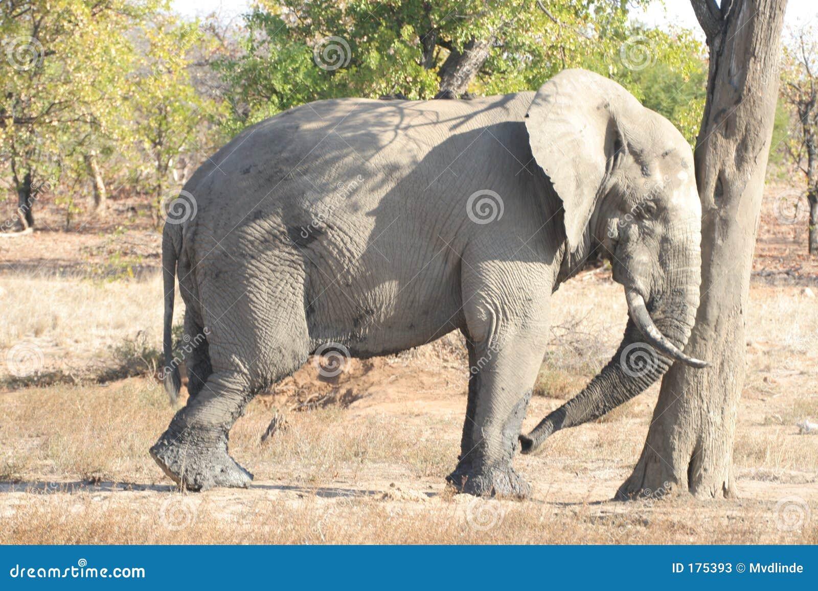 Elefante perezoso