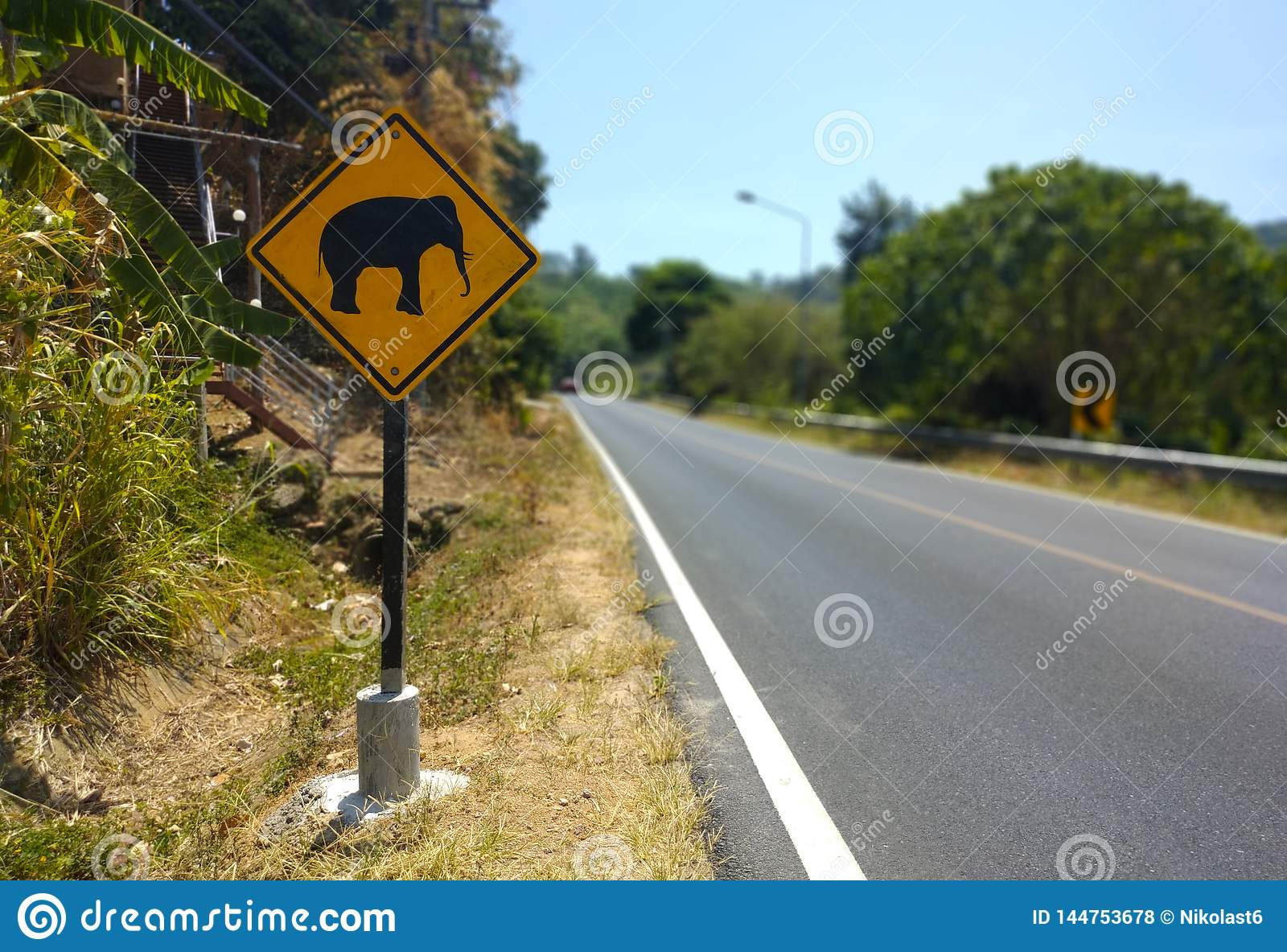 Elefante que adverte o sinal e a estrada amarelos no fundo em Tail?ndia
