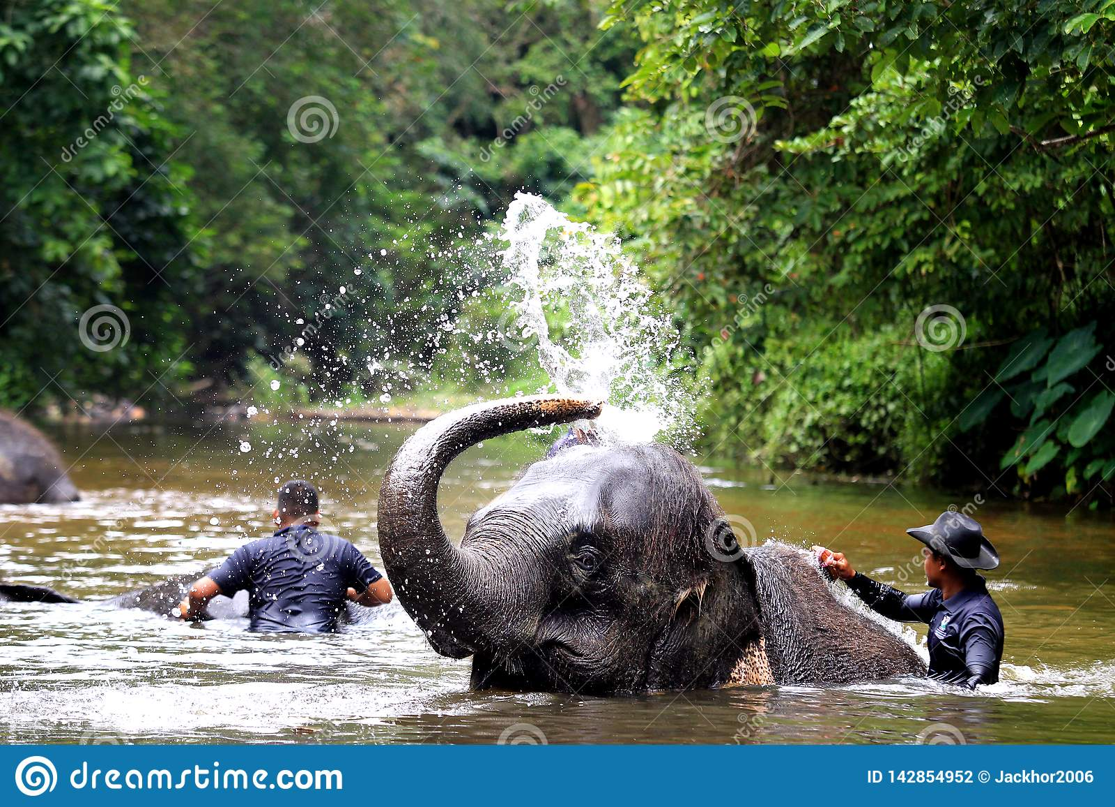 Elefante que se ba?a en el r?o