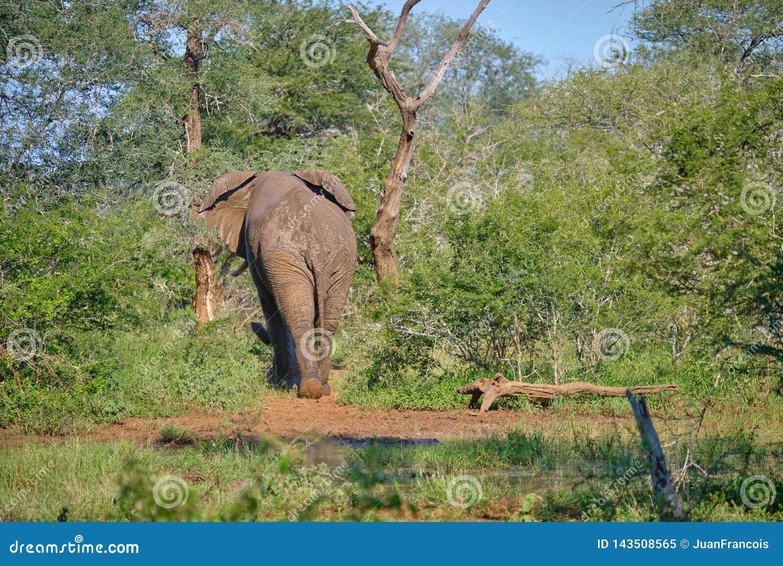 Elefante que se va