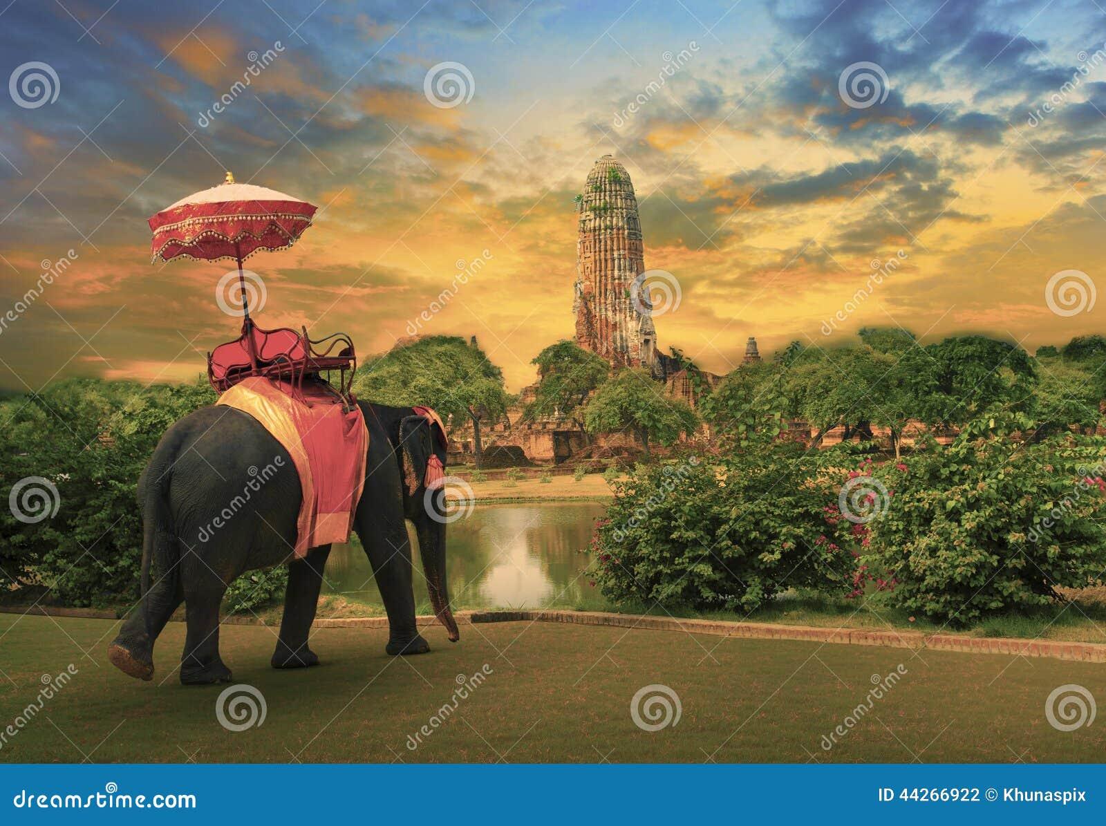 Elefante que se viste con los accesorios tailandeses de la tradición del reino que se colocan delante de pagoda vieja en el uso d