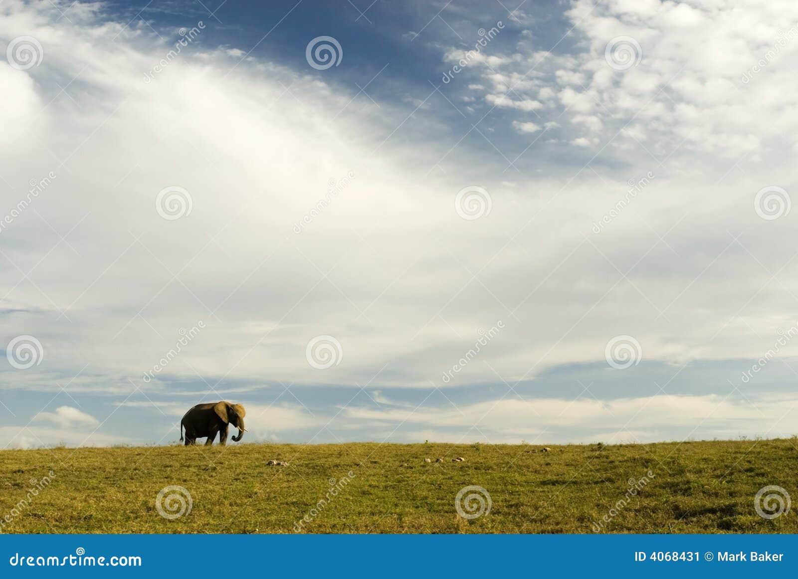 Elefante, terra e céu