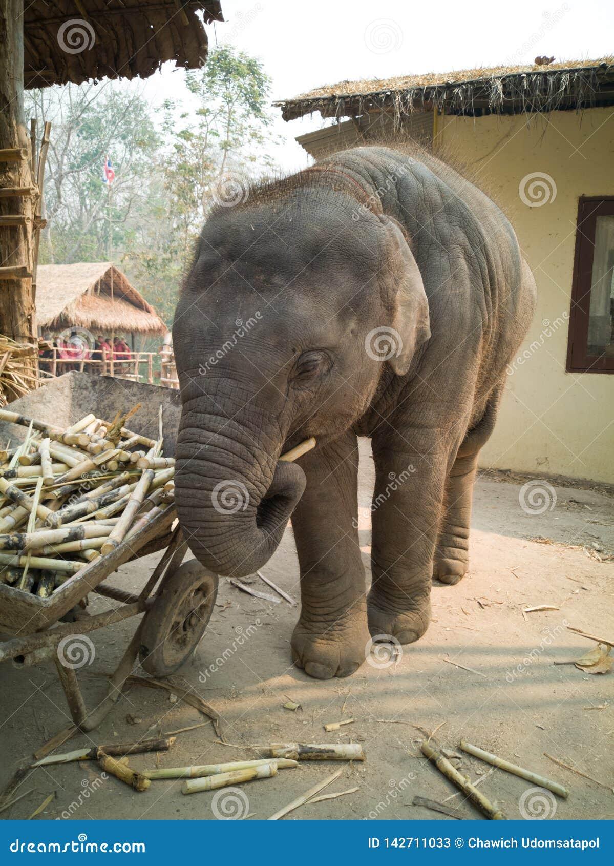 Elefante travieso del bebé