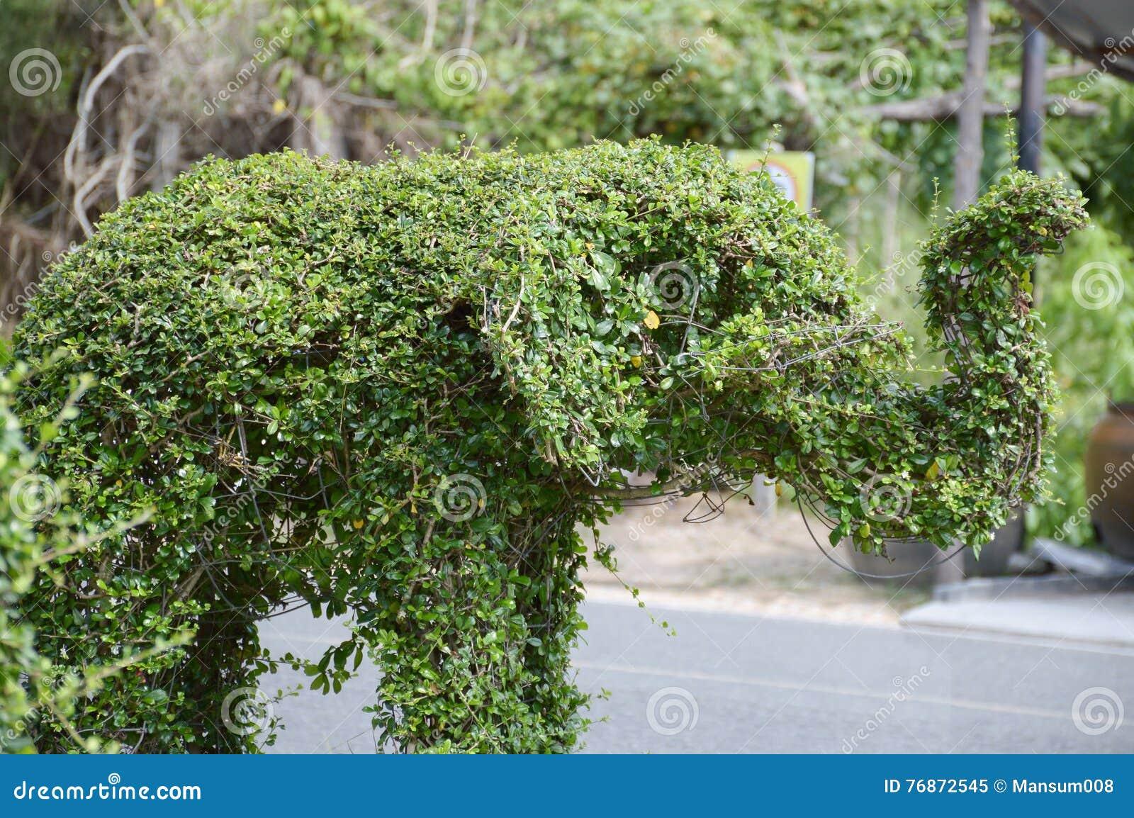 Alberi Nani Da Giardino elefante verde, alberi nani immagine stock - immagine di