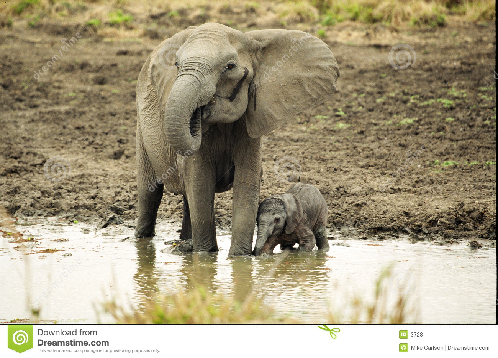 Elefante y recién nacido