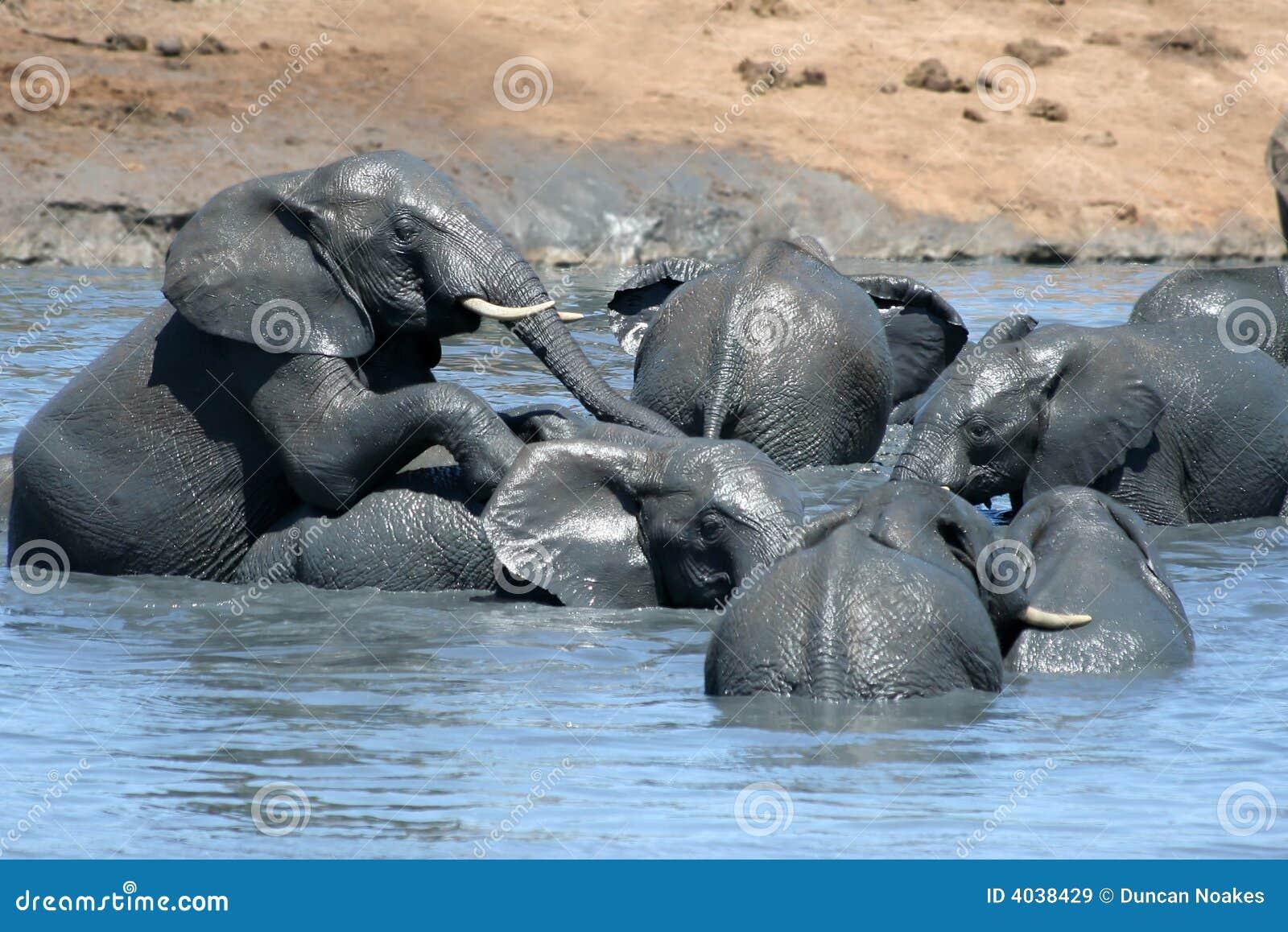 elefanten die im wasser spielen stockbild bild von gro. Black Bedroom Furniture Sets. Home Design Ideas