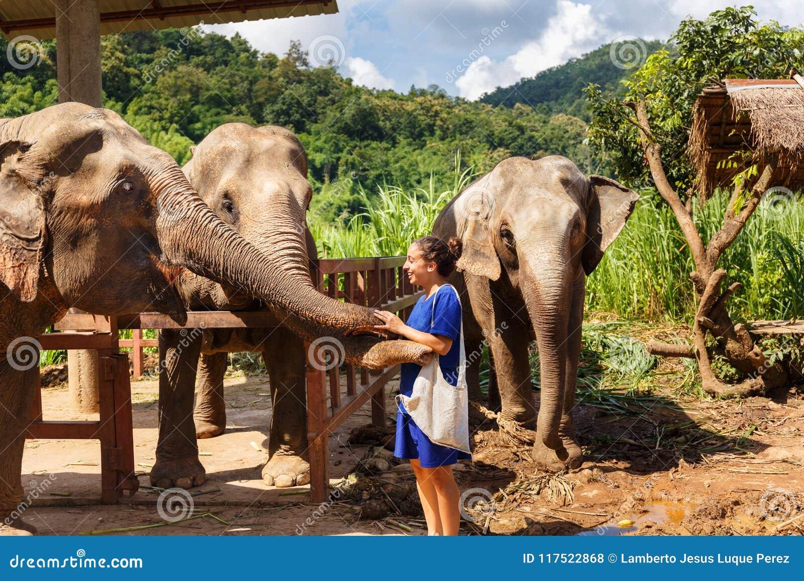Elefanter för flickasmekning tre på fristaden i Chiang Mai Thailand