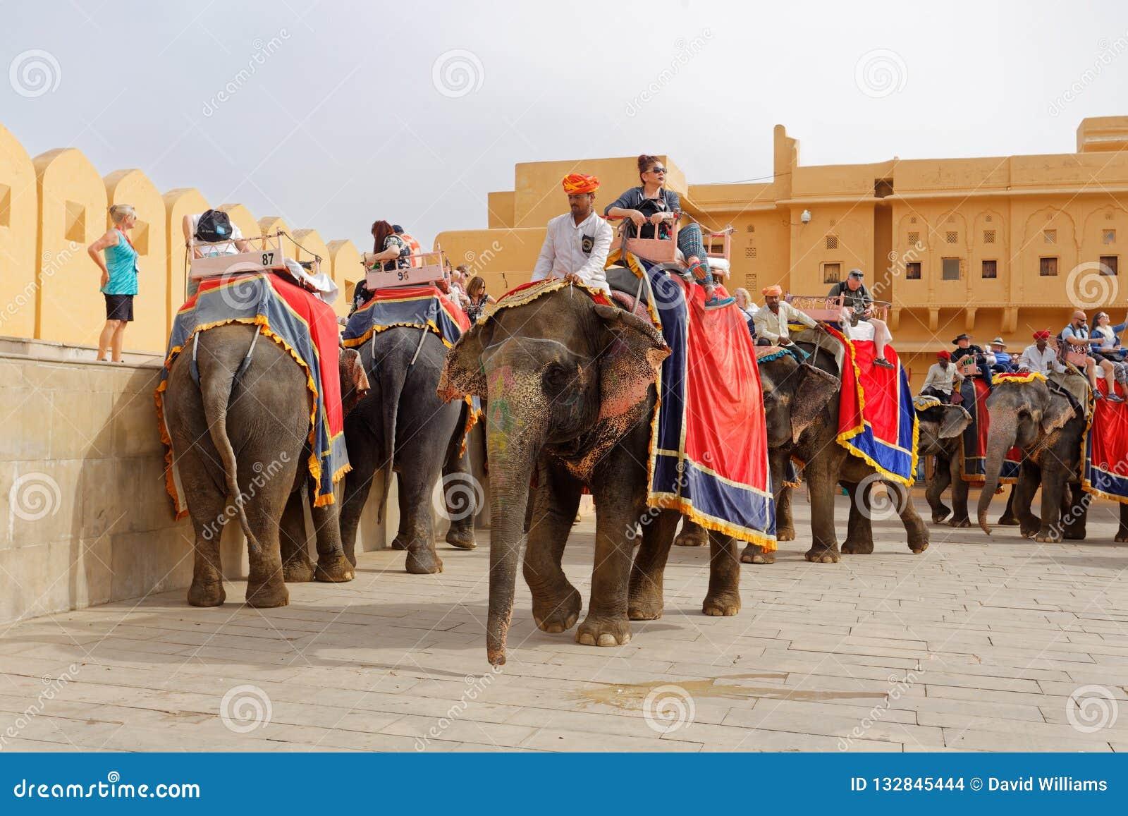 Elefanter och mahouts i borggård av det bärnstensfärgade fortet Indien