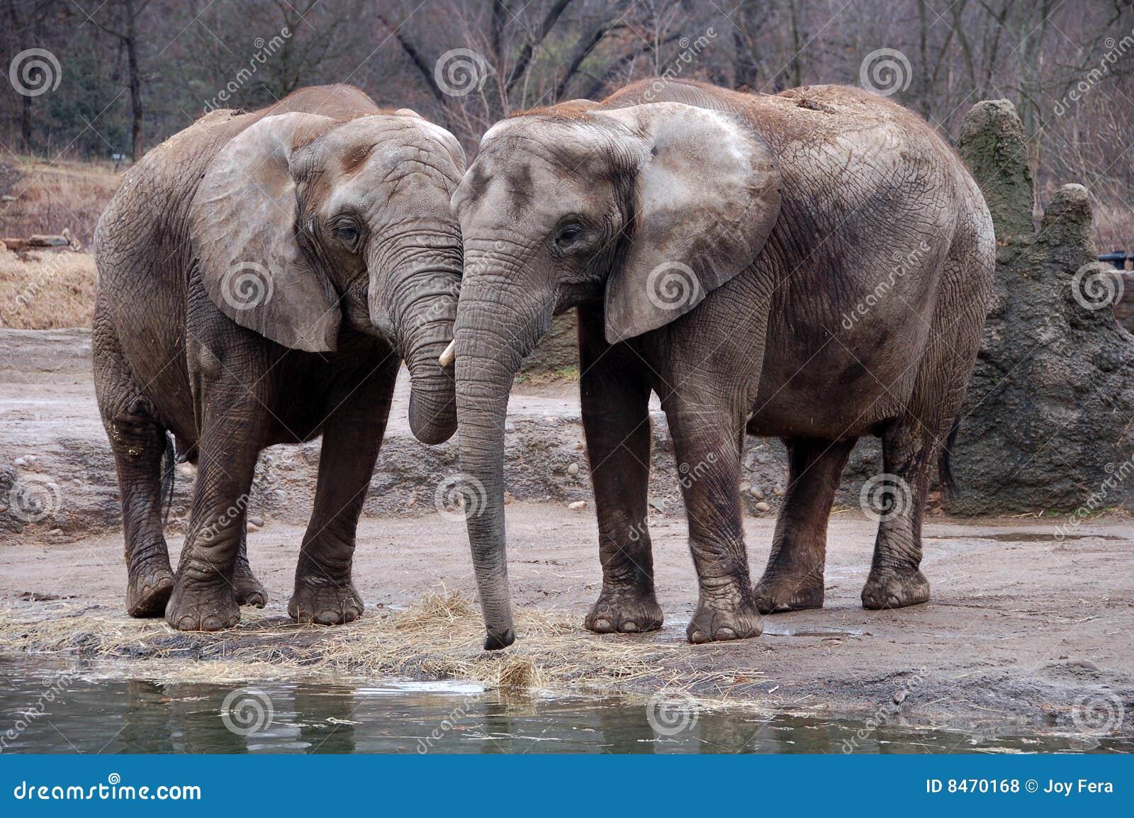 Elefanter två
