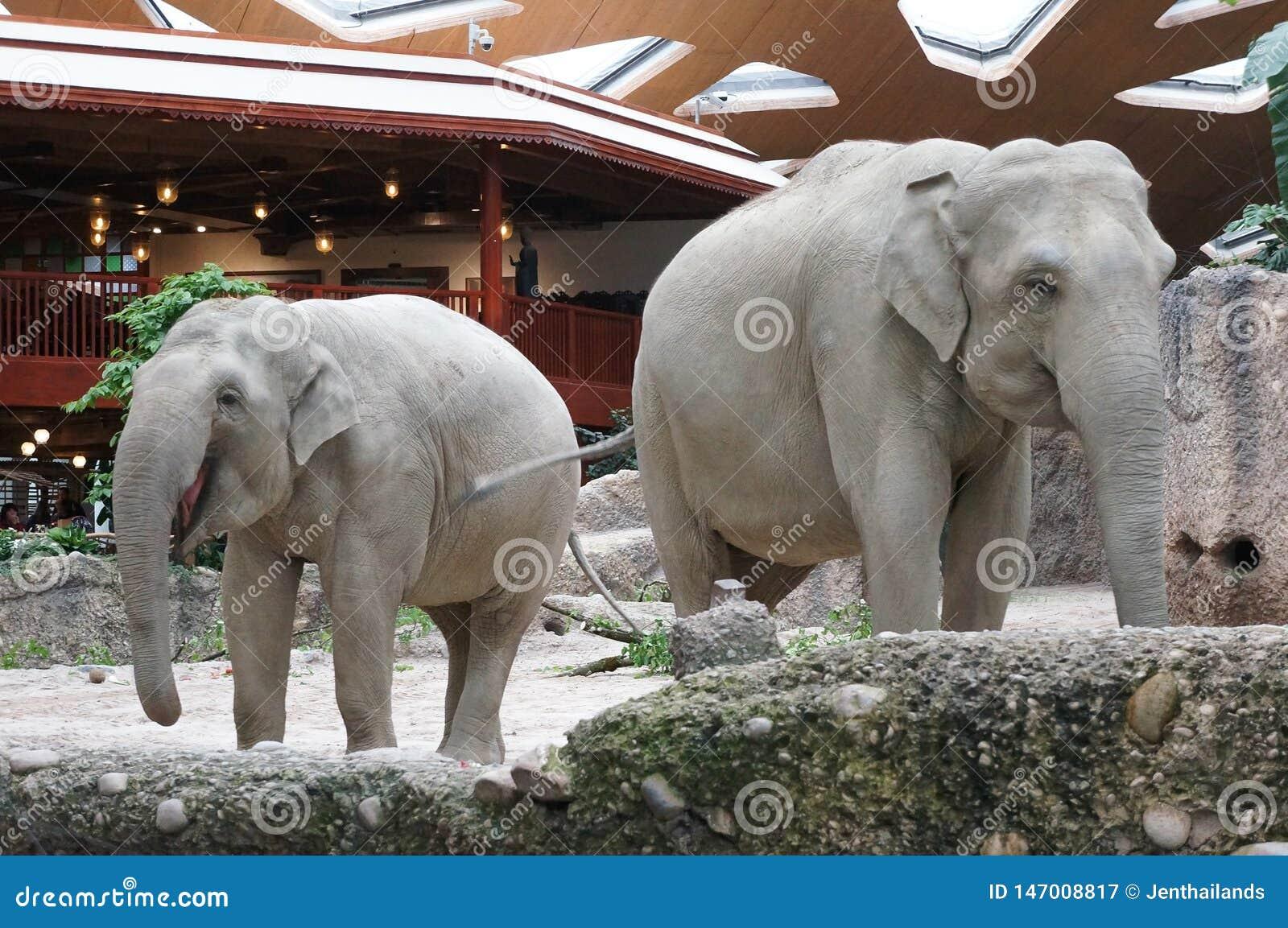 Elefanter Zurich zoo