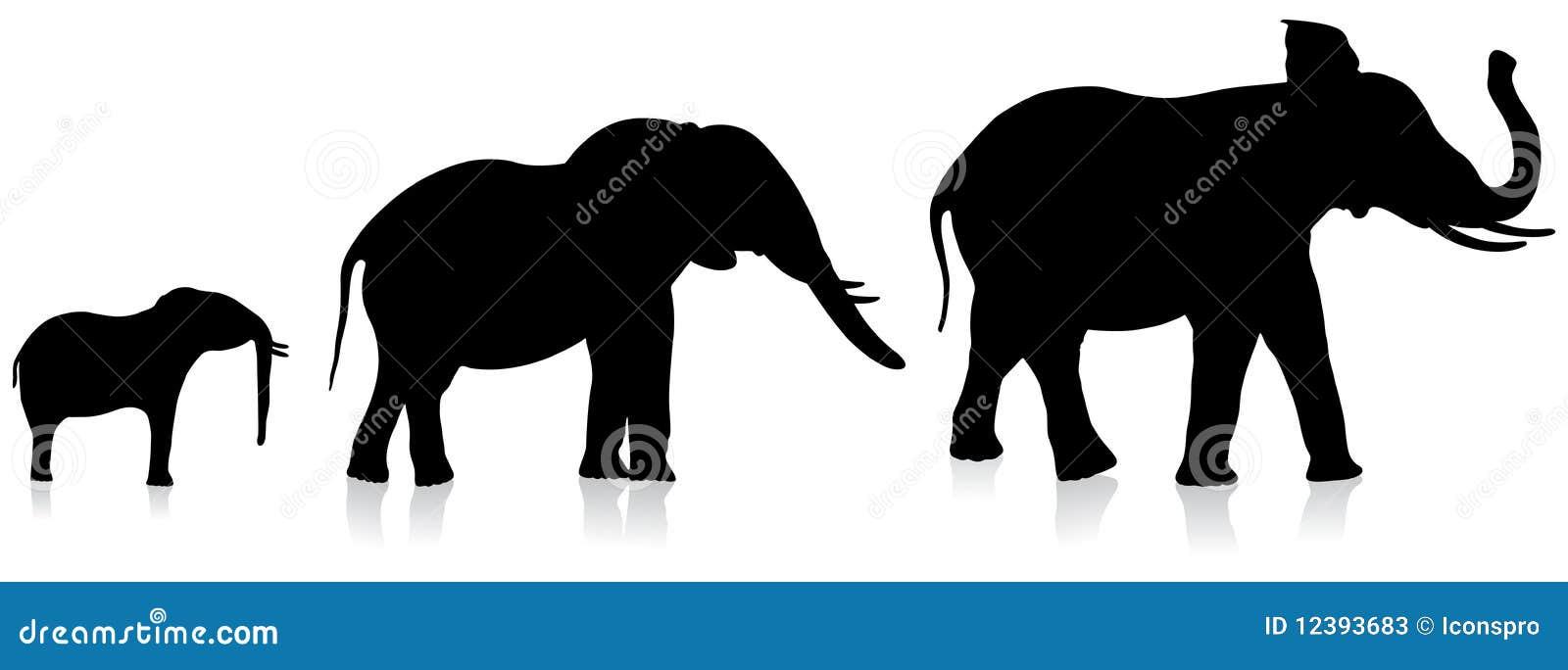 Elefantes Adultos E Infantiles En El Fondo Blanco Fotos De
