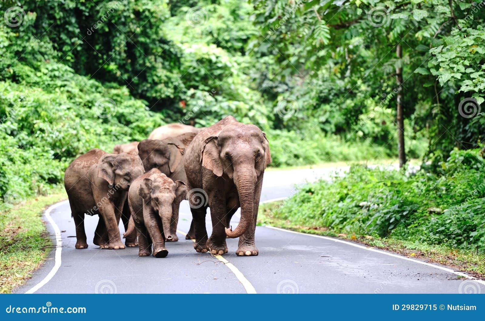 Família do elefante