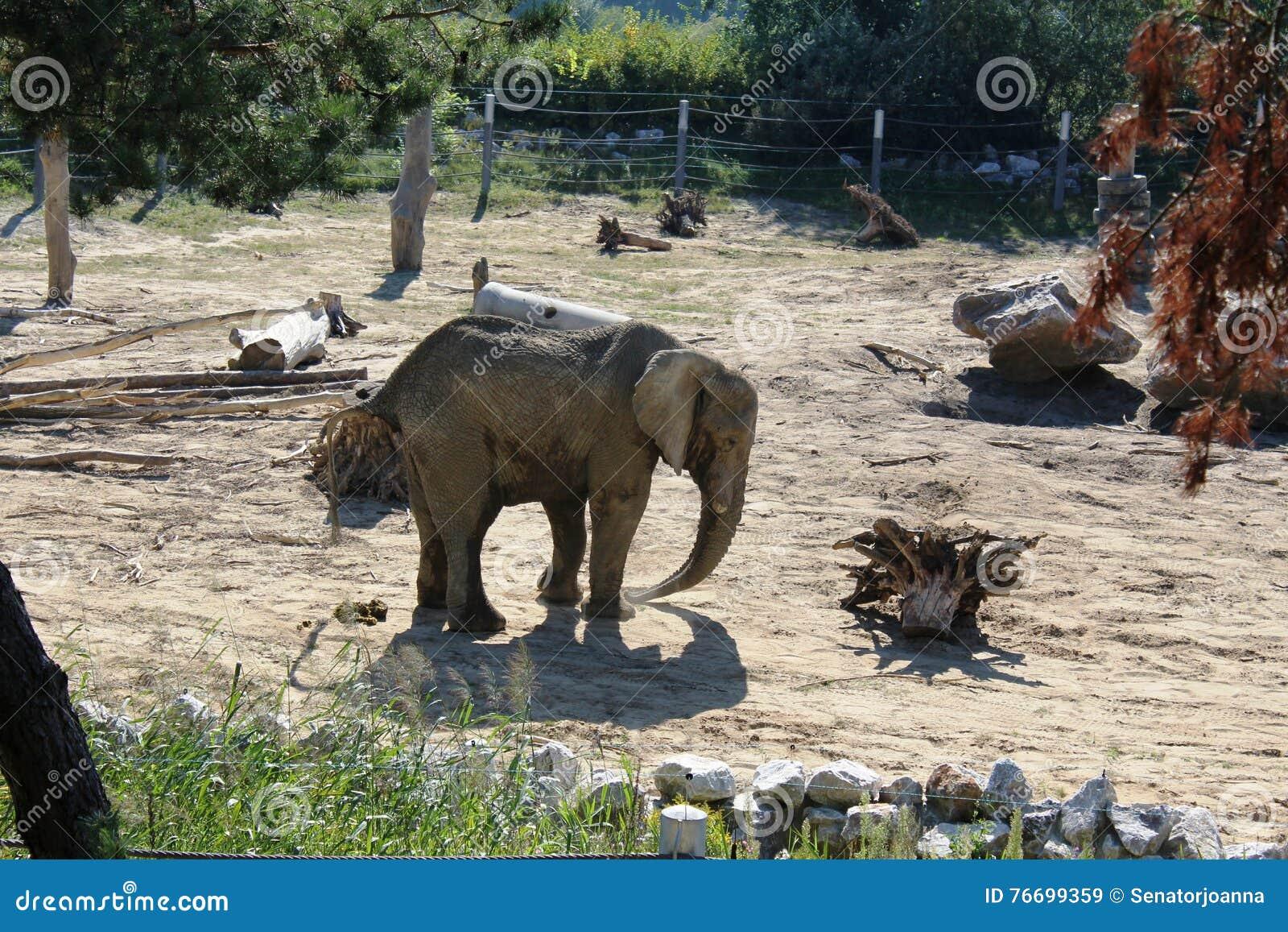 Elefantes en el PARQUE ZOOLÓGICO en Poznán, Polonia