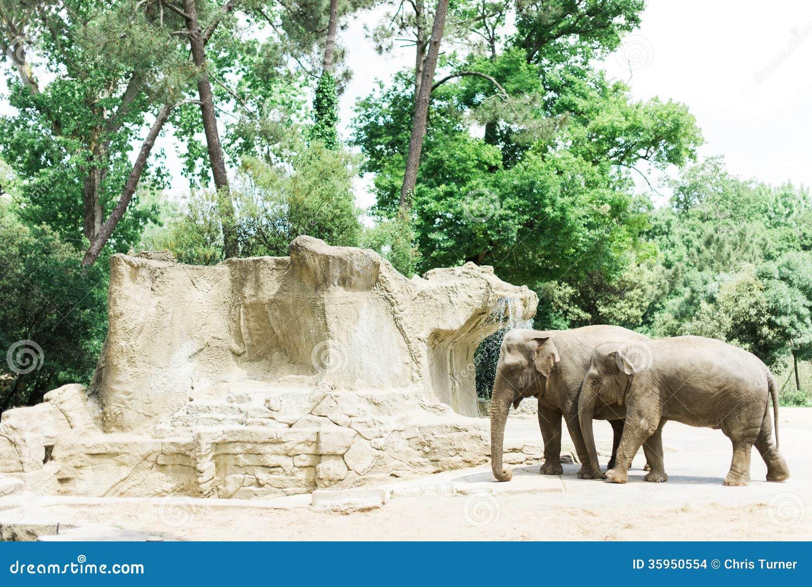 Elefantes en un parque zoológico soleado