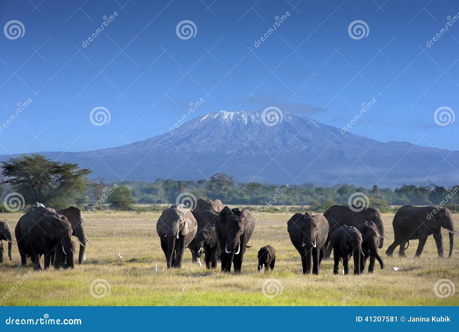 Elefantes no parque nacional de Kilimanjaro