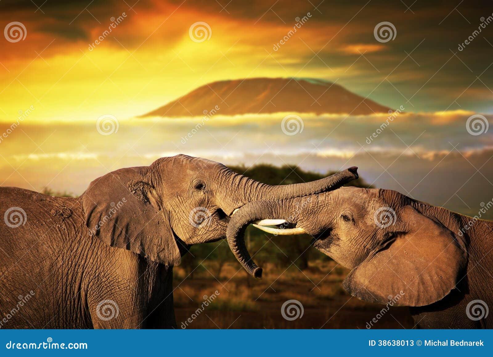 Elefantes que jogam no savana. O Monte Kilimanjaro