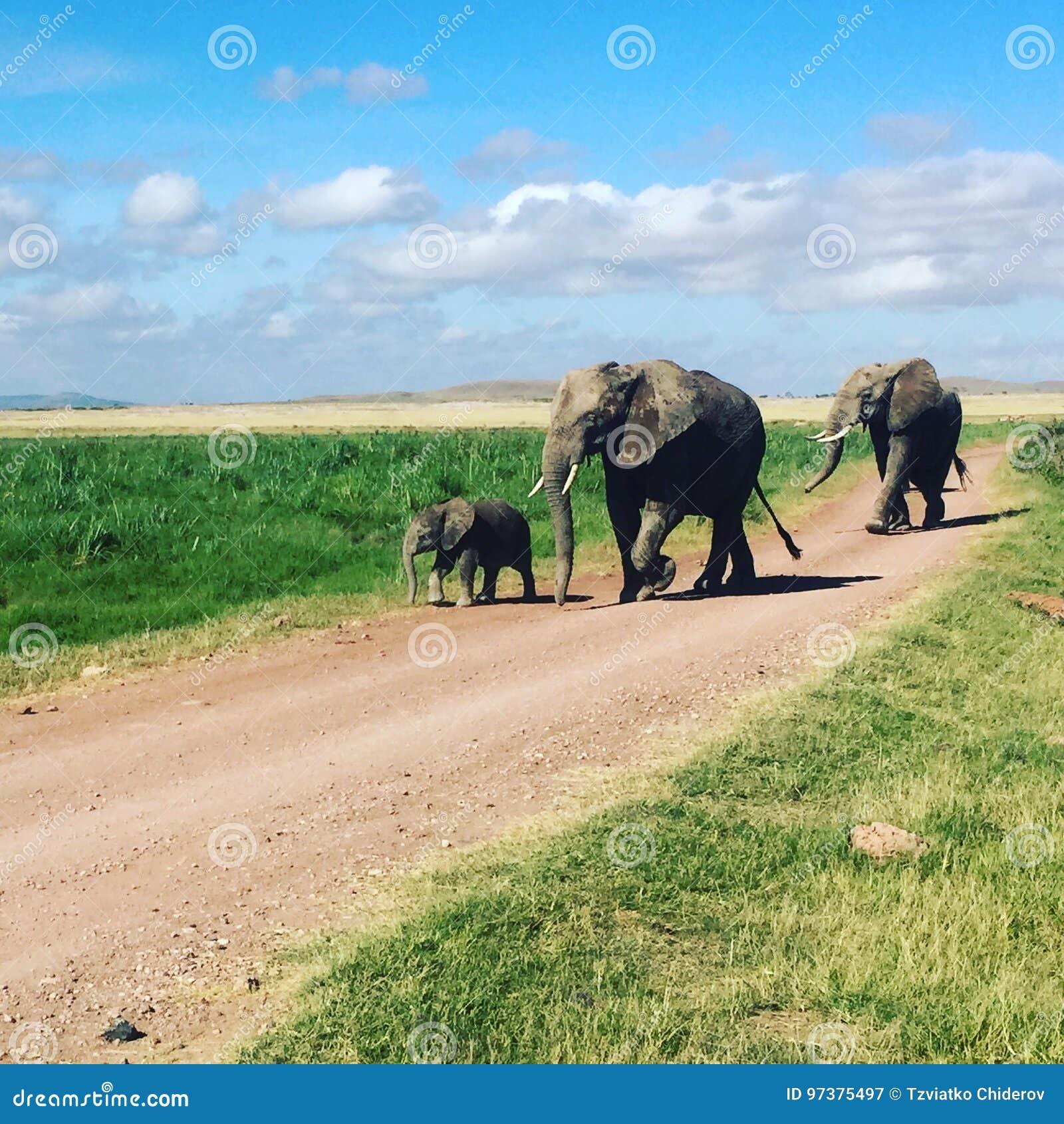 Elefantfamilie, die einen Spaziergang macht