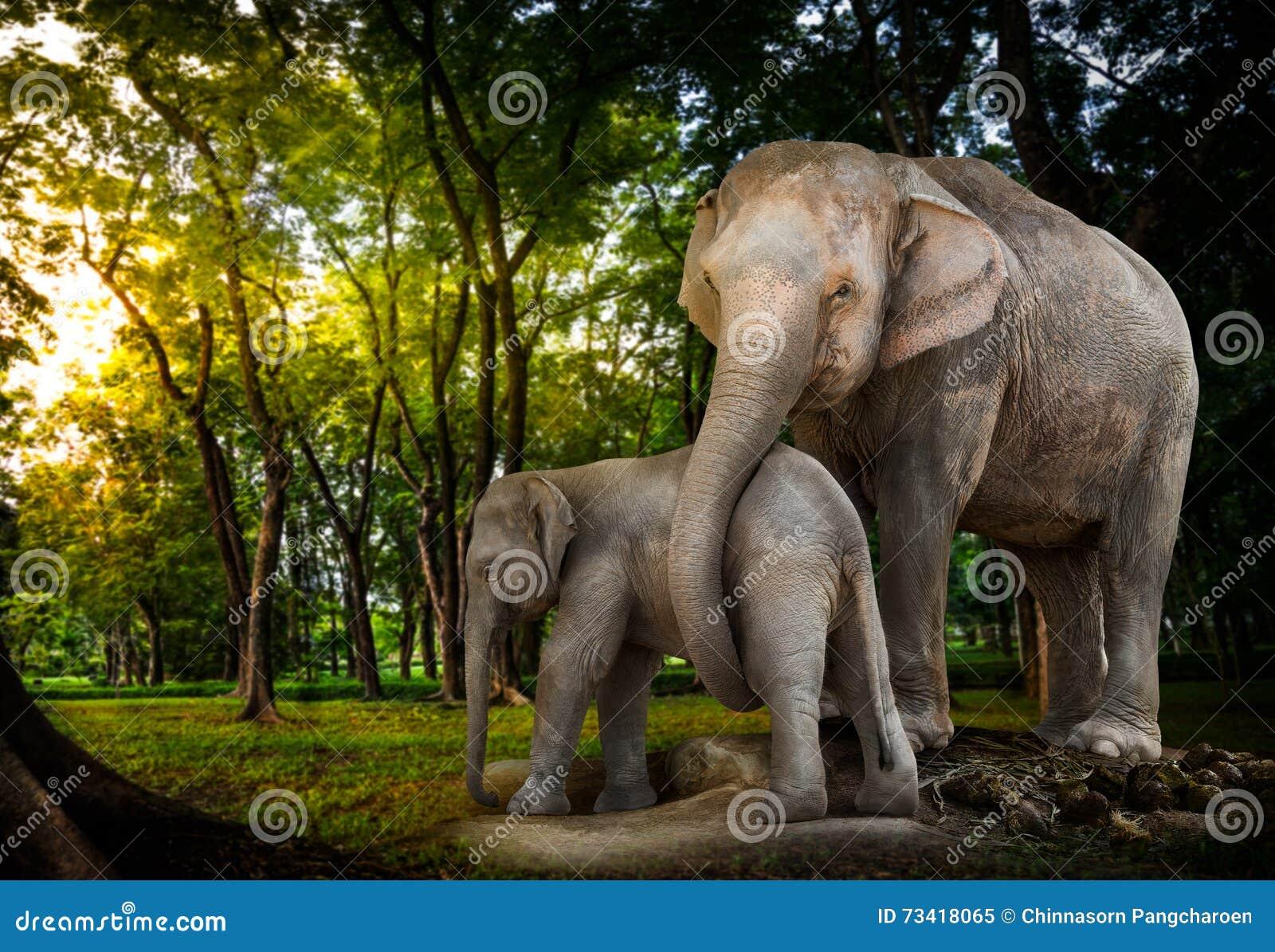Elefantfamilj i skog