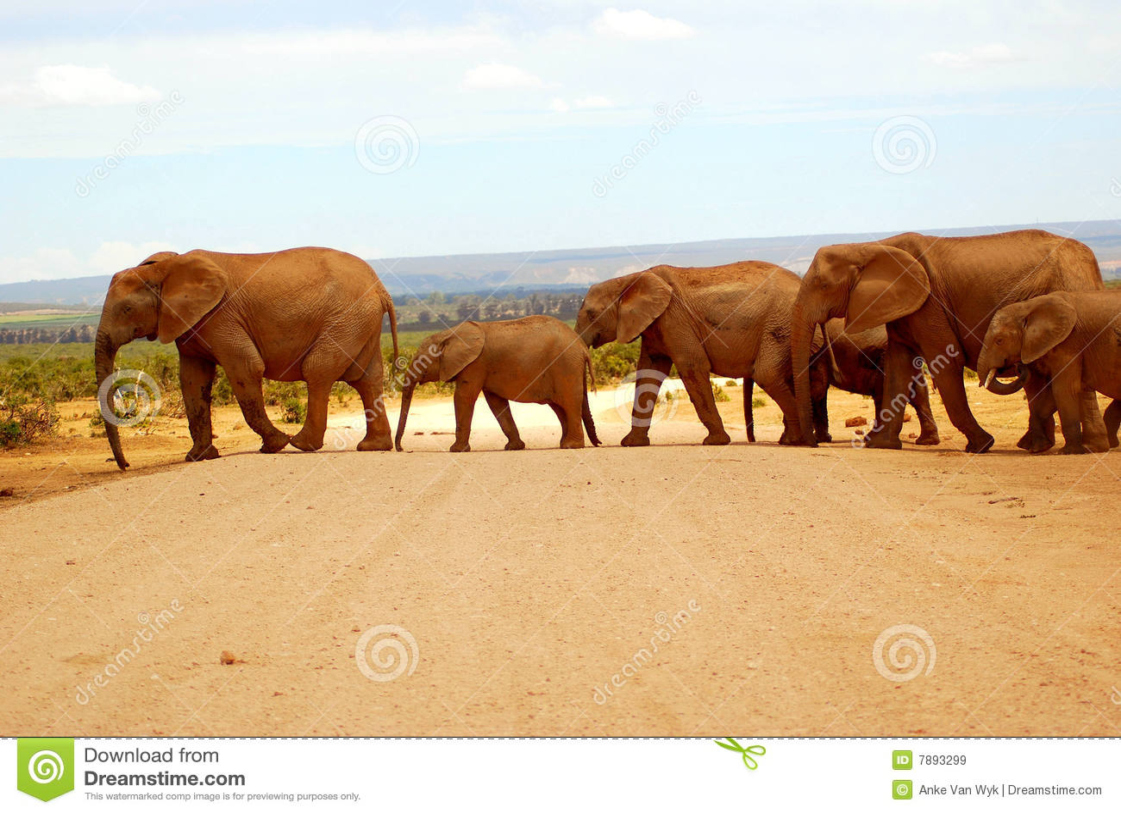Elefantherden-Überfahrtstraße