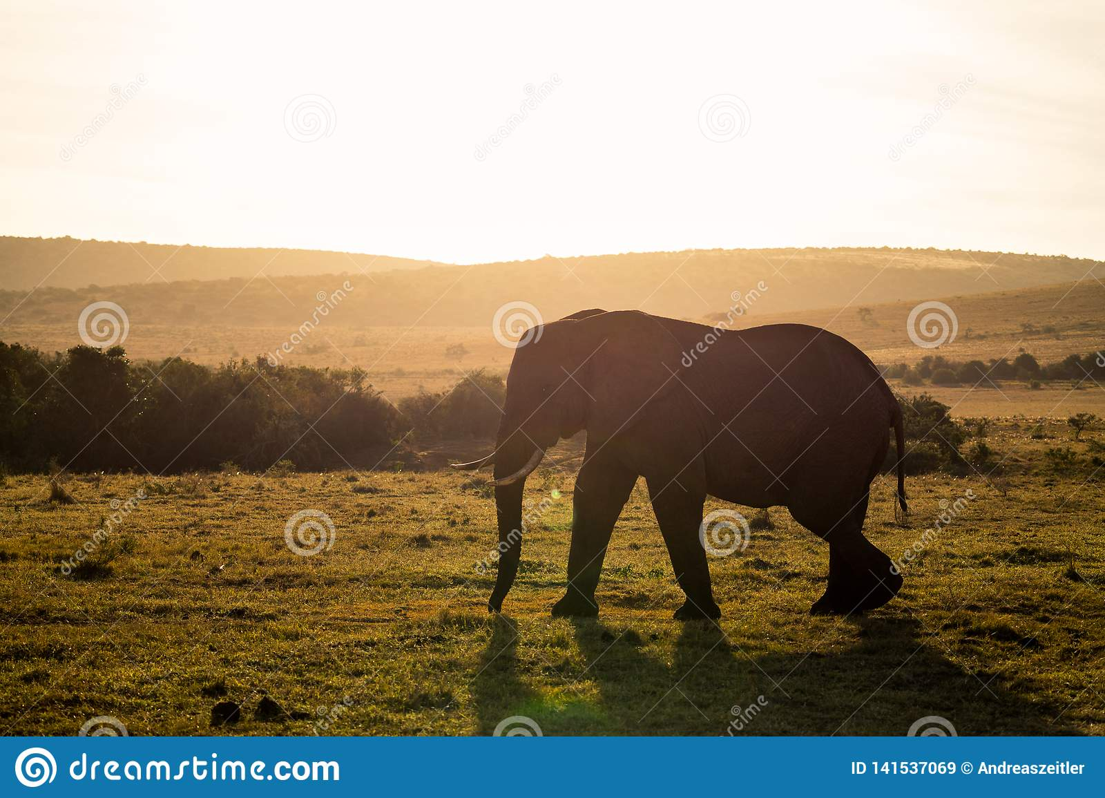 Elefanti in Addo Elephant National Park Port Elizabeth - nel Sudafrica