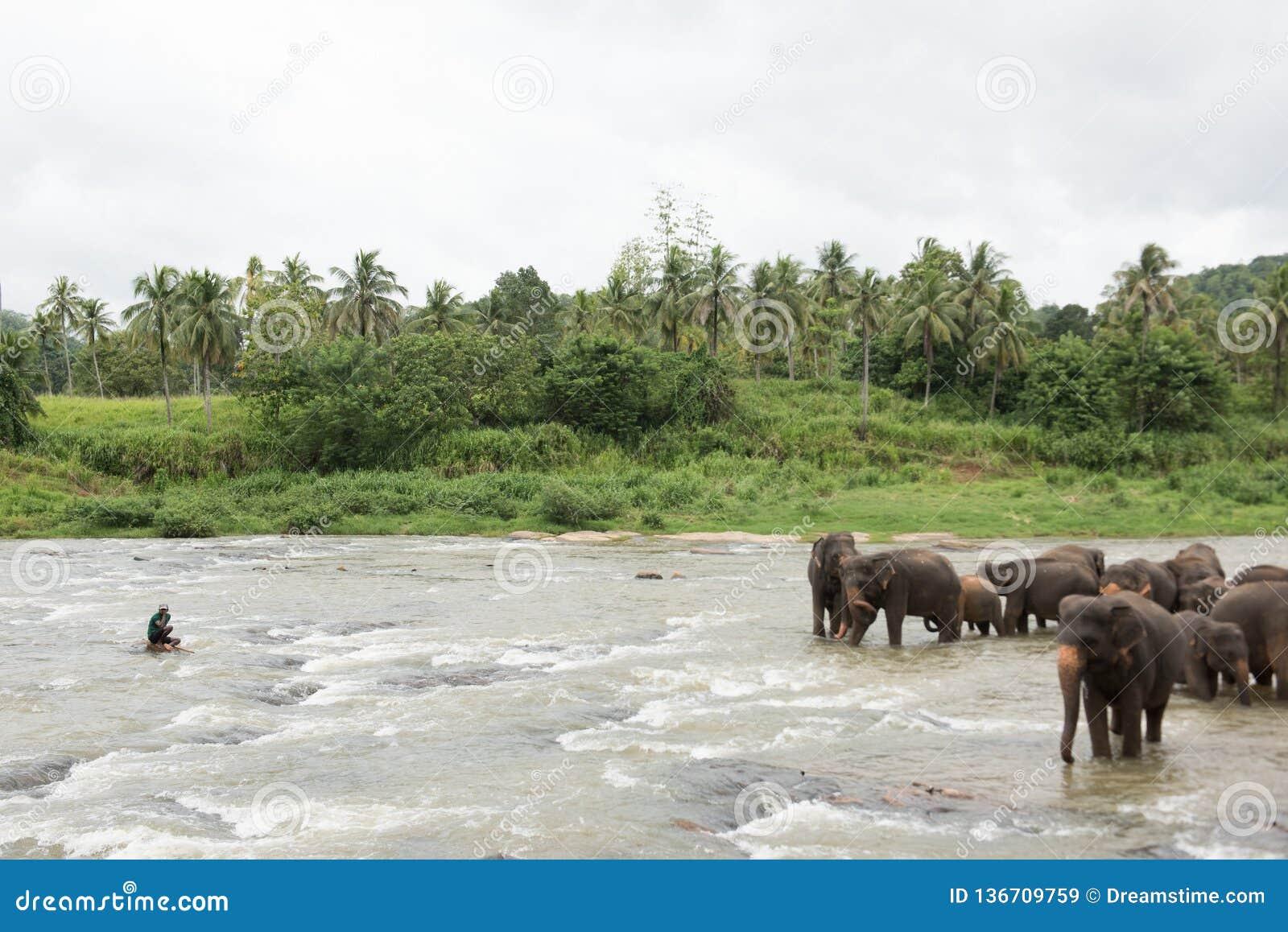 Elefanti nello Sri Lanka