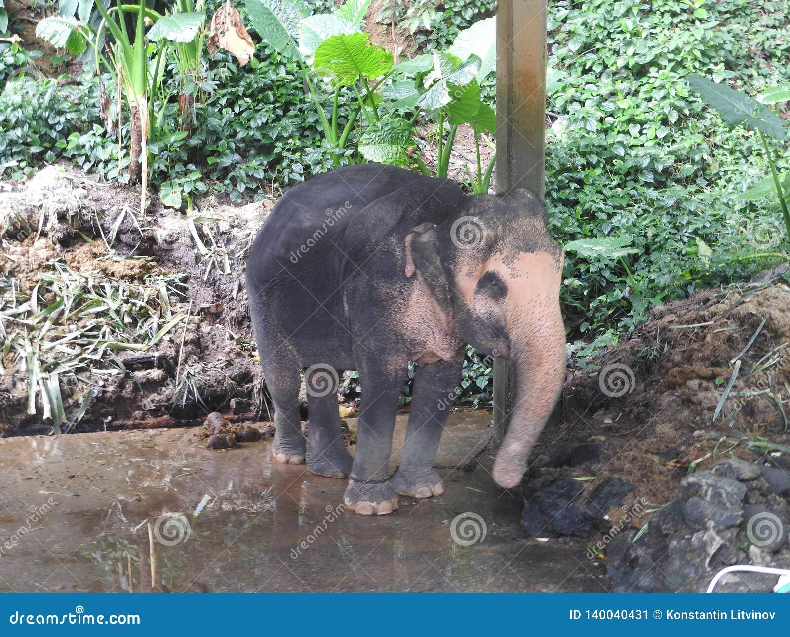 Elefantsafari i den pittoreska Dao Pak Park i Thailand