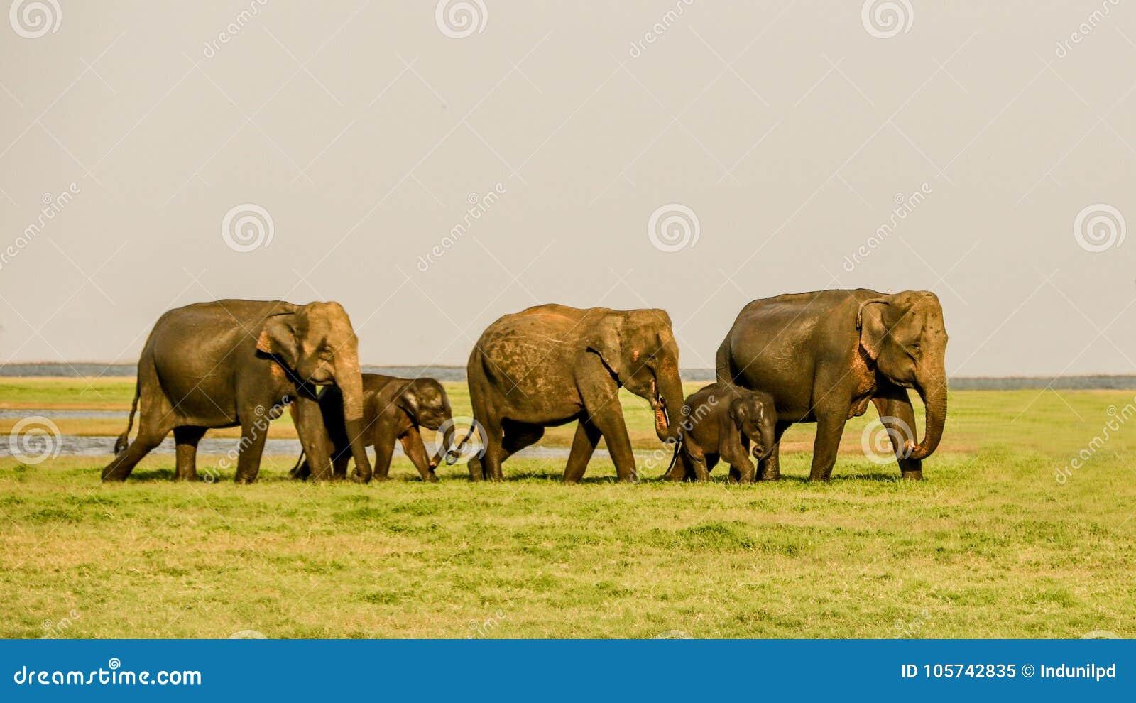 Elefantweg